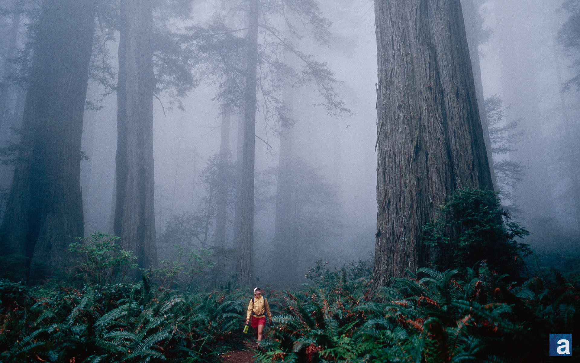 1920x1200 Backgrounds top | jpeg v.5.4 picture, Redwood forest