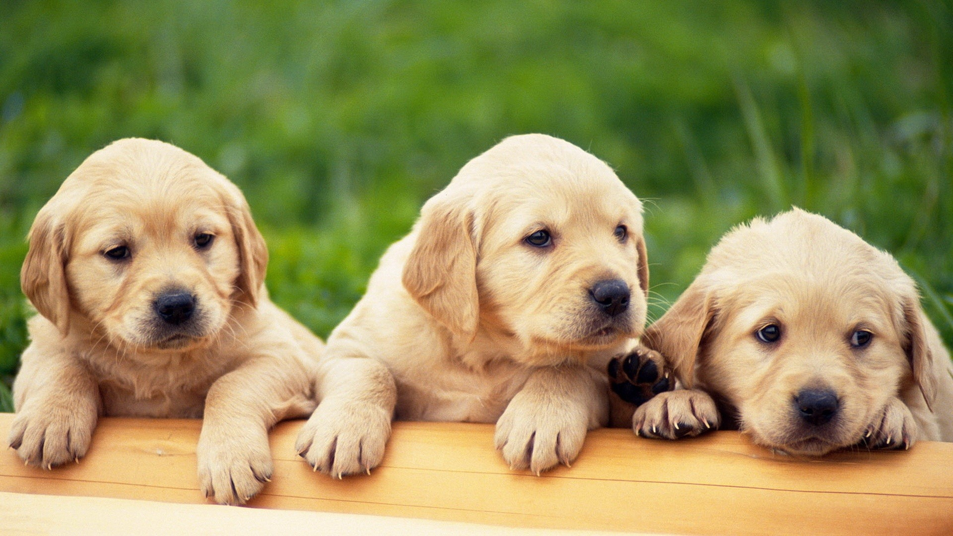 Cute Puppy Wallpapers for Desktop (58+ images)