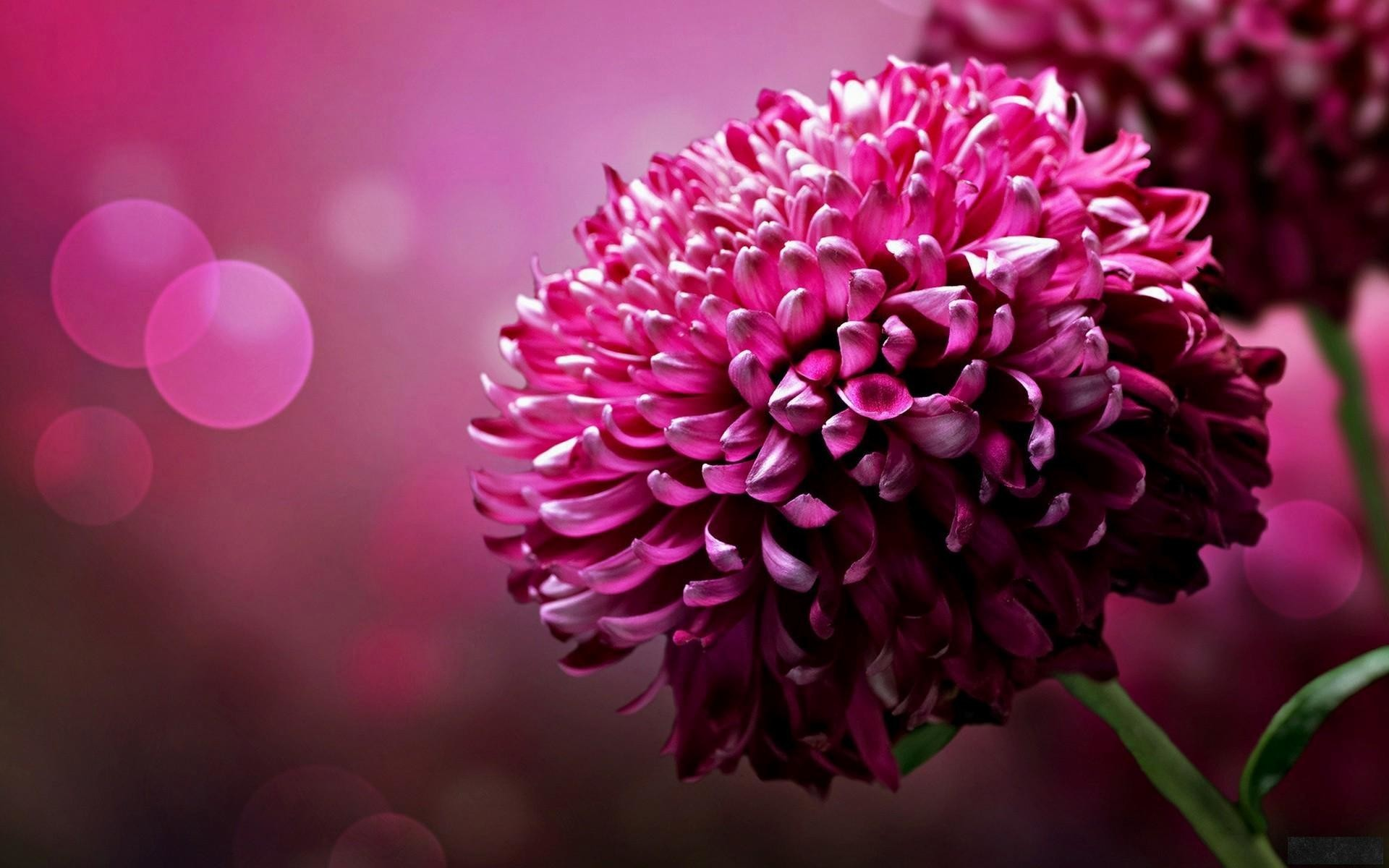 1920x1200 wallpaper.wiki-Pretty-wallpapers-flower-beautiful-papel-flowers-