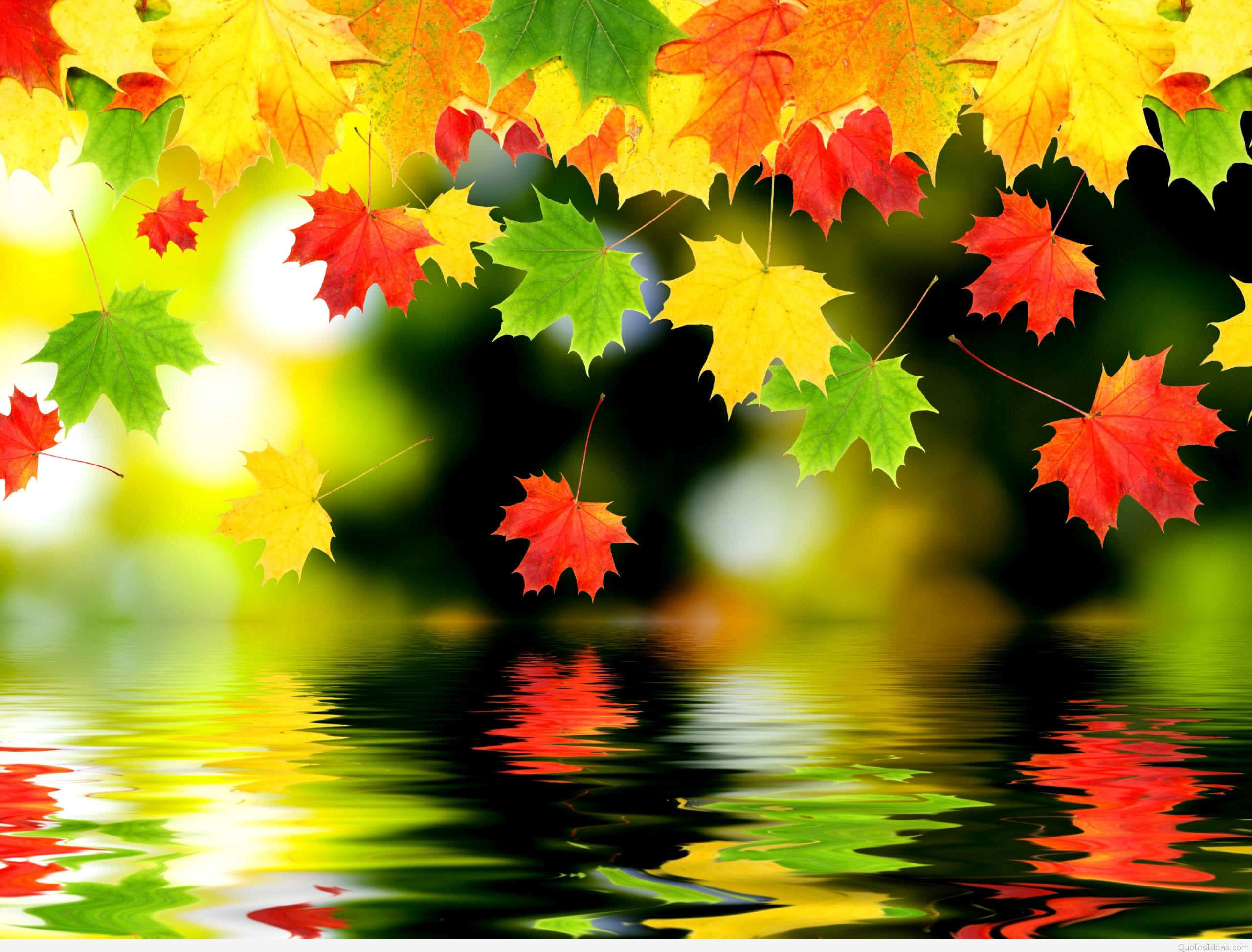 Beautiful Nature Autumn Background With Maple Leaves Stock Image