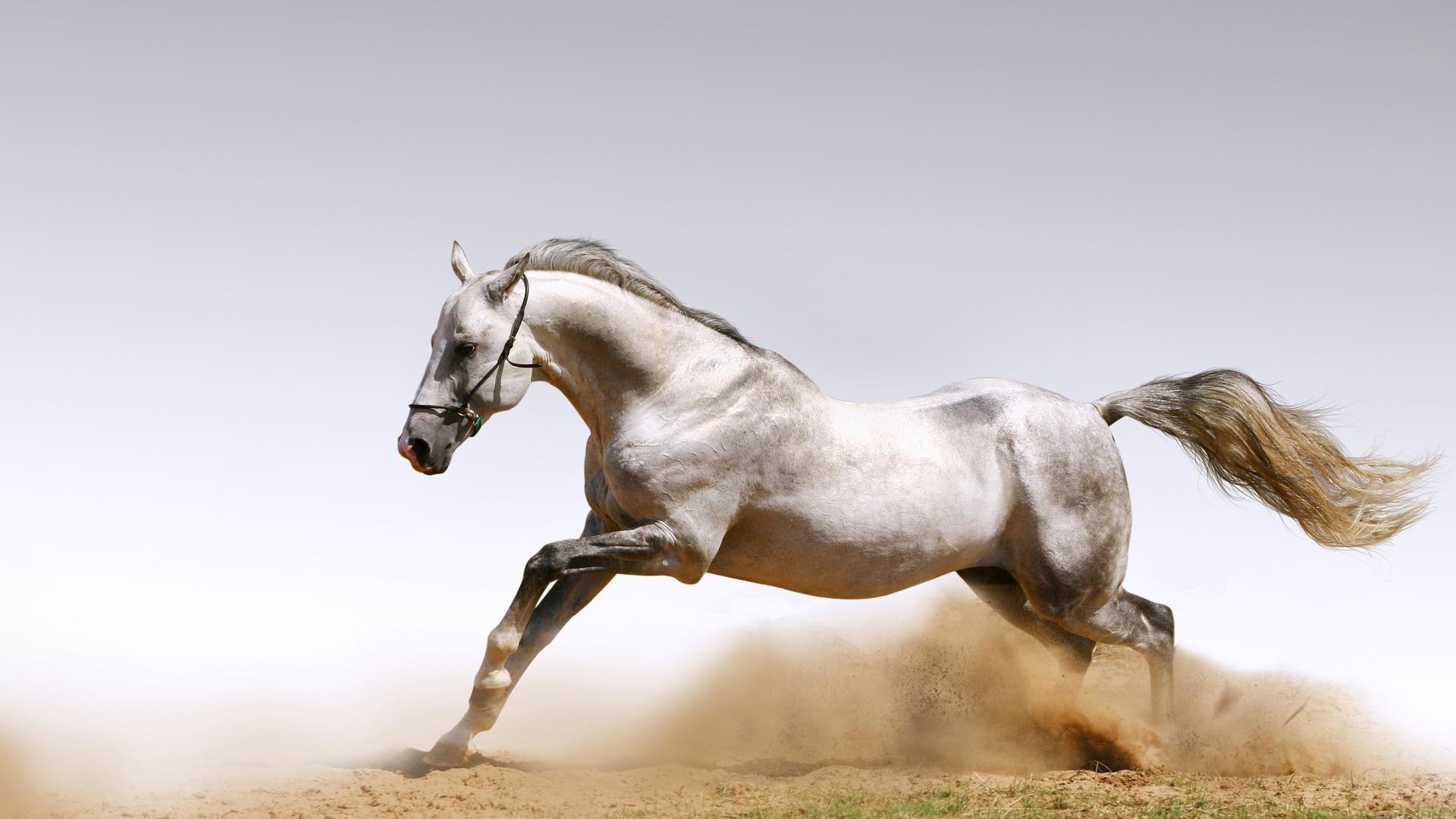 1920x1080 ... Arabian Horse Wallpapers, Pictures, Images ...