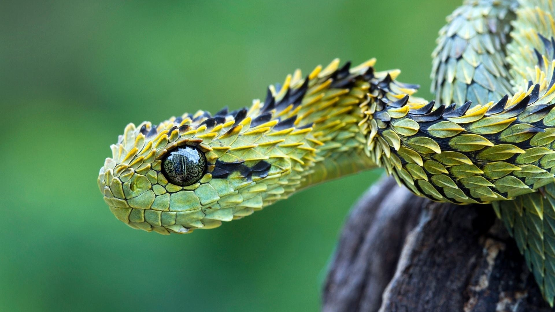 1920x1080 Full HD 1080p Snake Wallpapers HD, Desktop Backgrounds