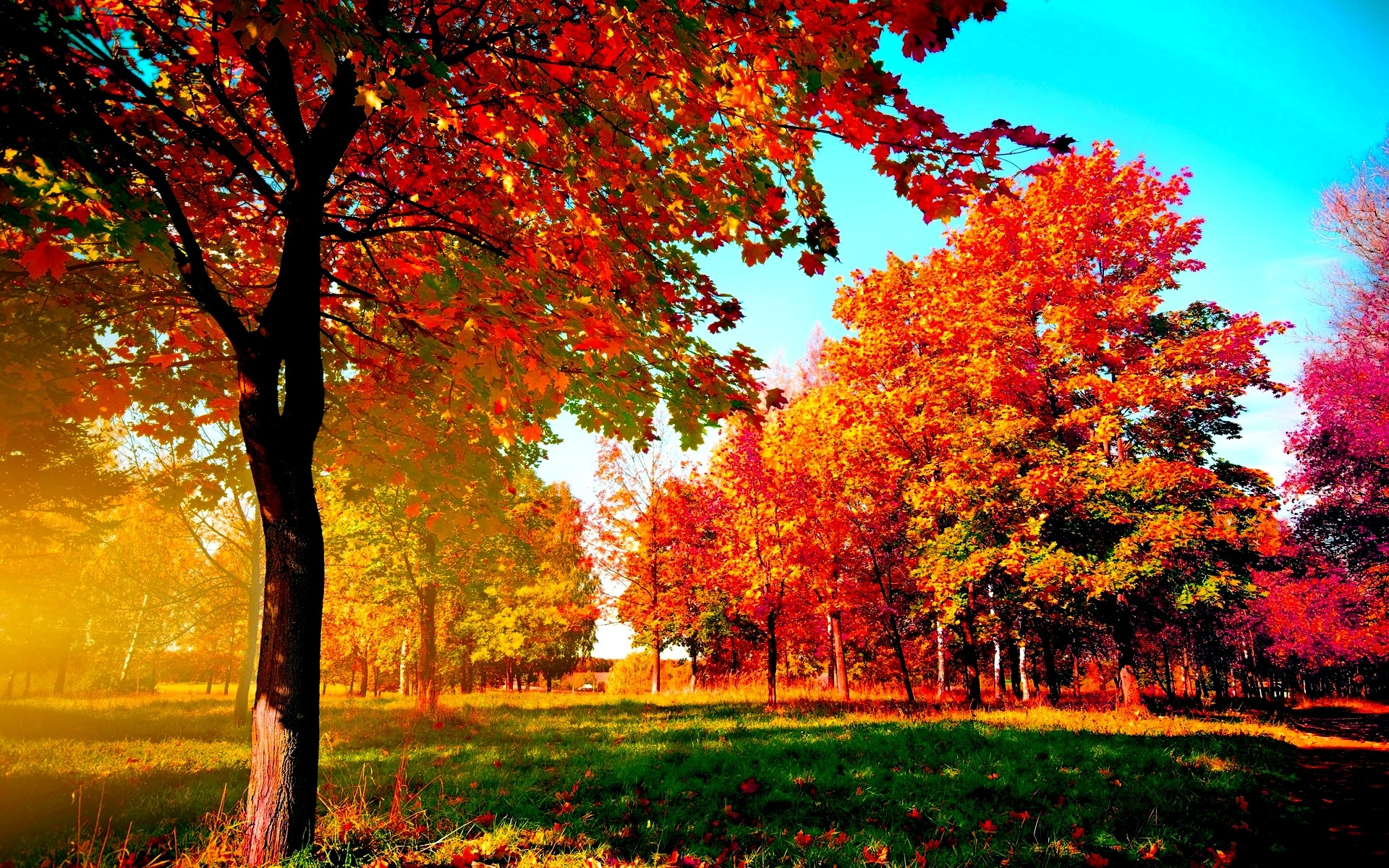 1920x1200 Autumn-trees Wide Desktop Background