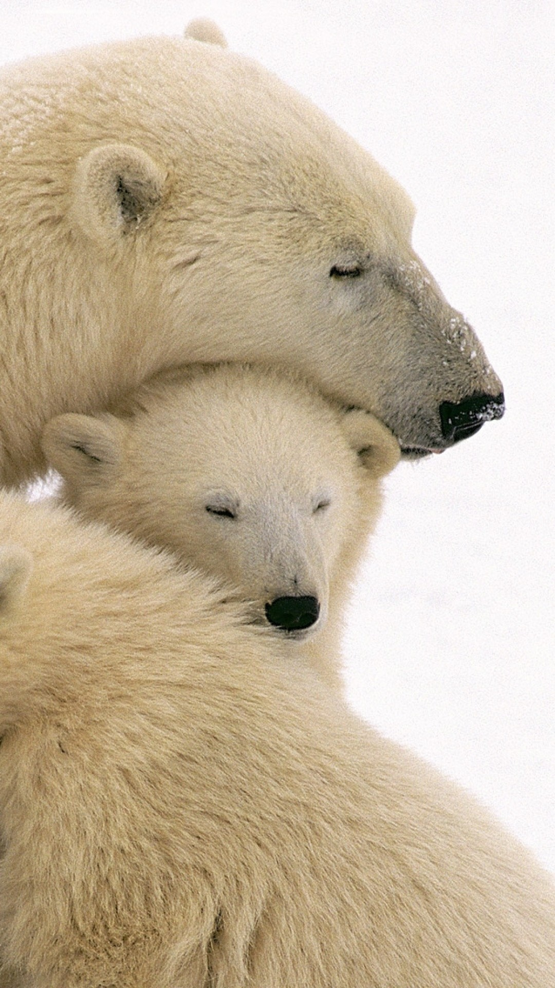 1080x1920  Wallpaper polar bears, care, family, babies