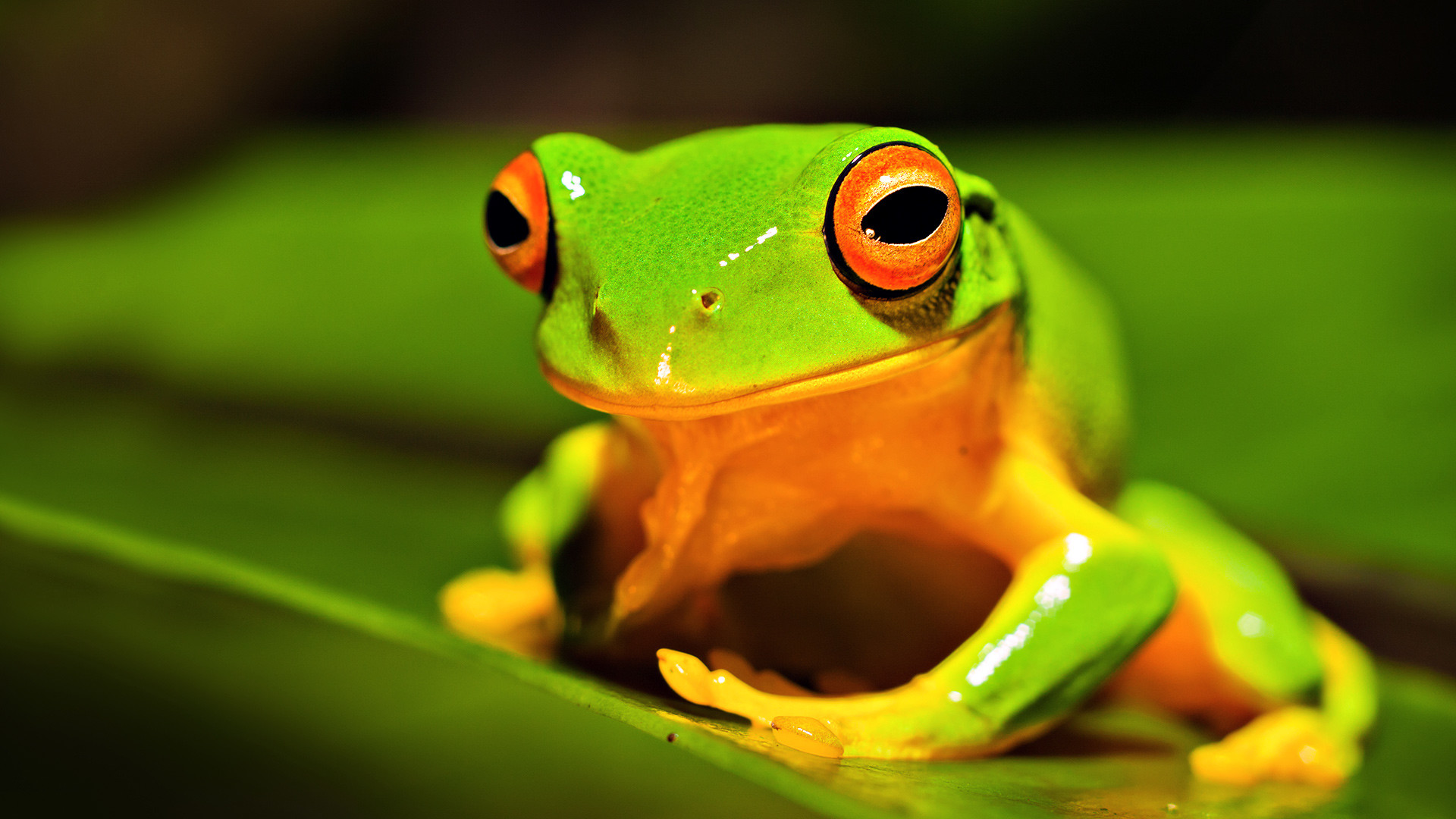 Cartoon Frog Wallpaper (46+ images)