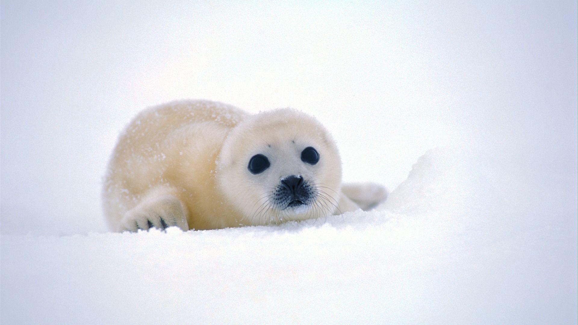 Cute Winter Animal Wallpaper (48+ images)