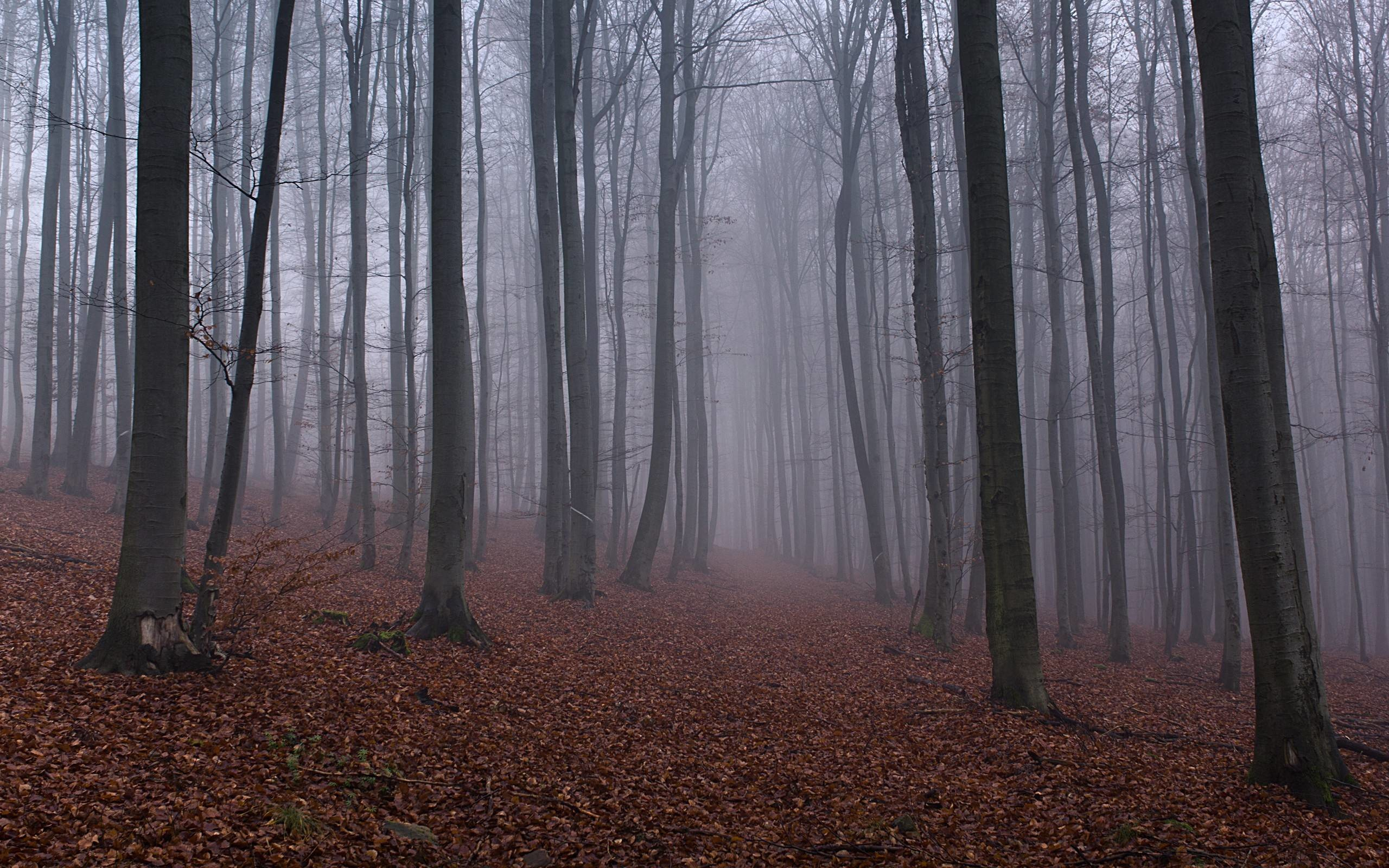 2560x1600 Free Woodland Misty Wallpapers, Free Woodland Misty HD Wallpapers .