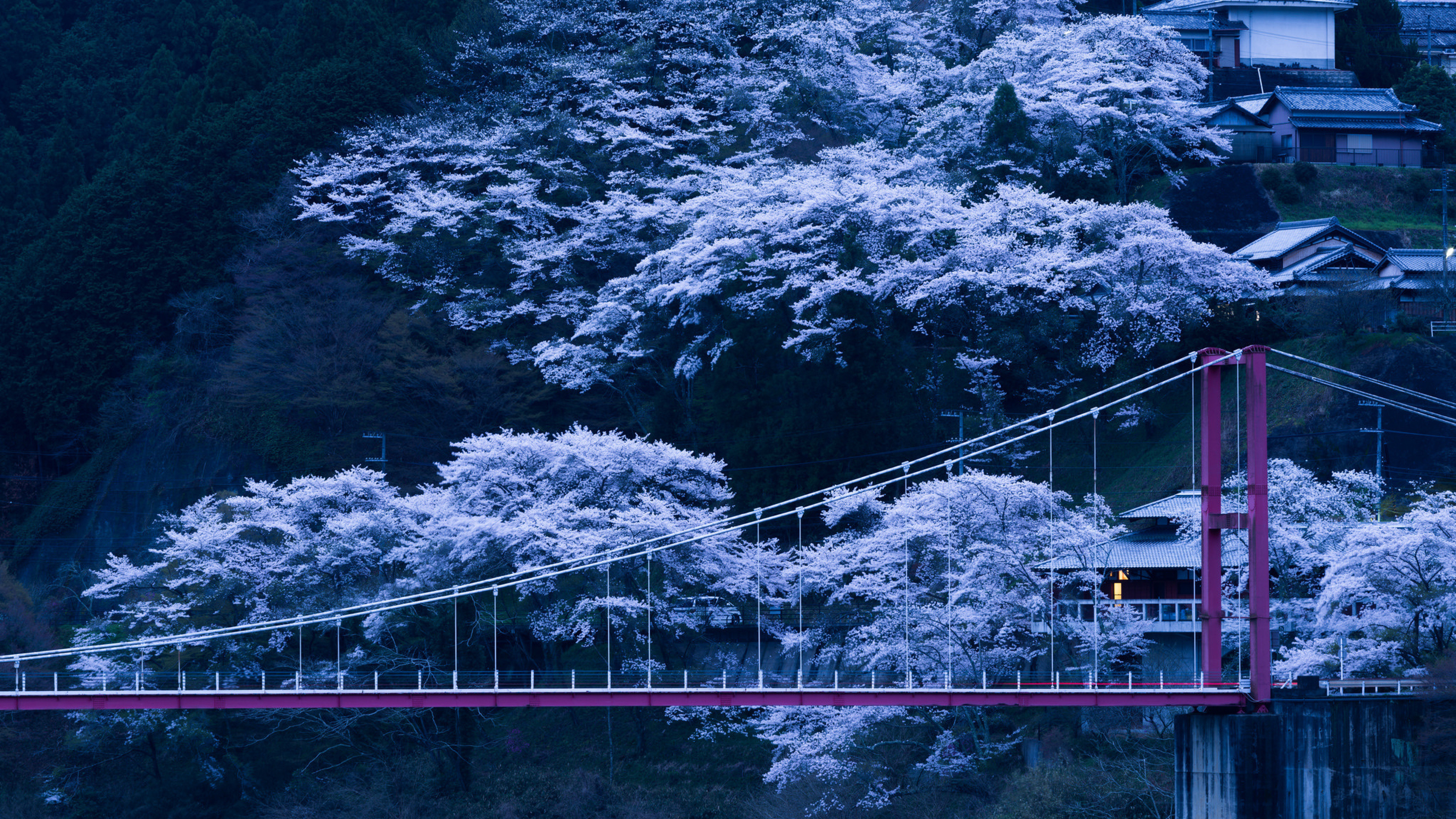 3840x2160 Sky, Japan, Cherry Blossom, Color, Plant Wallpaper in  Resolution