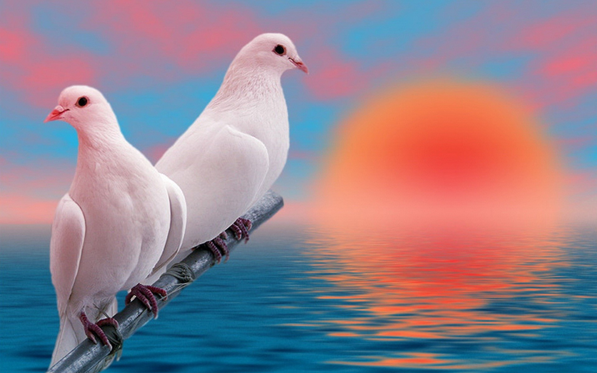 Lovebirds Wallpaper 56 Images