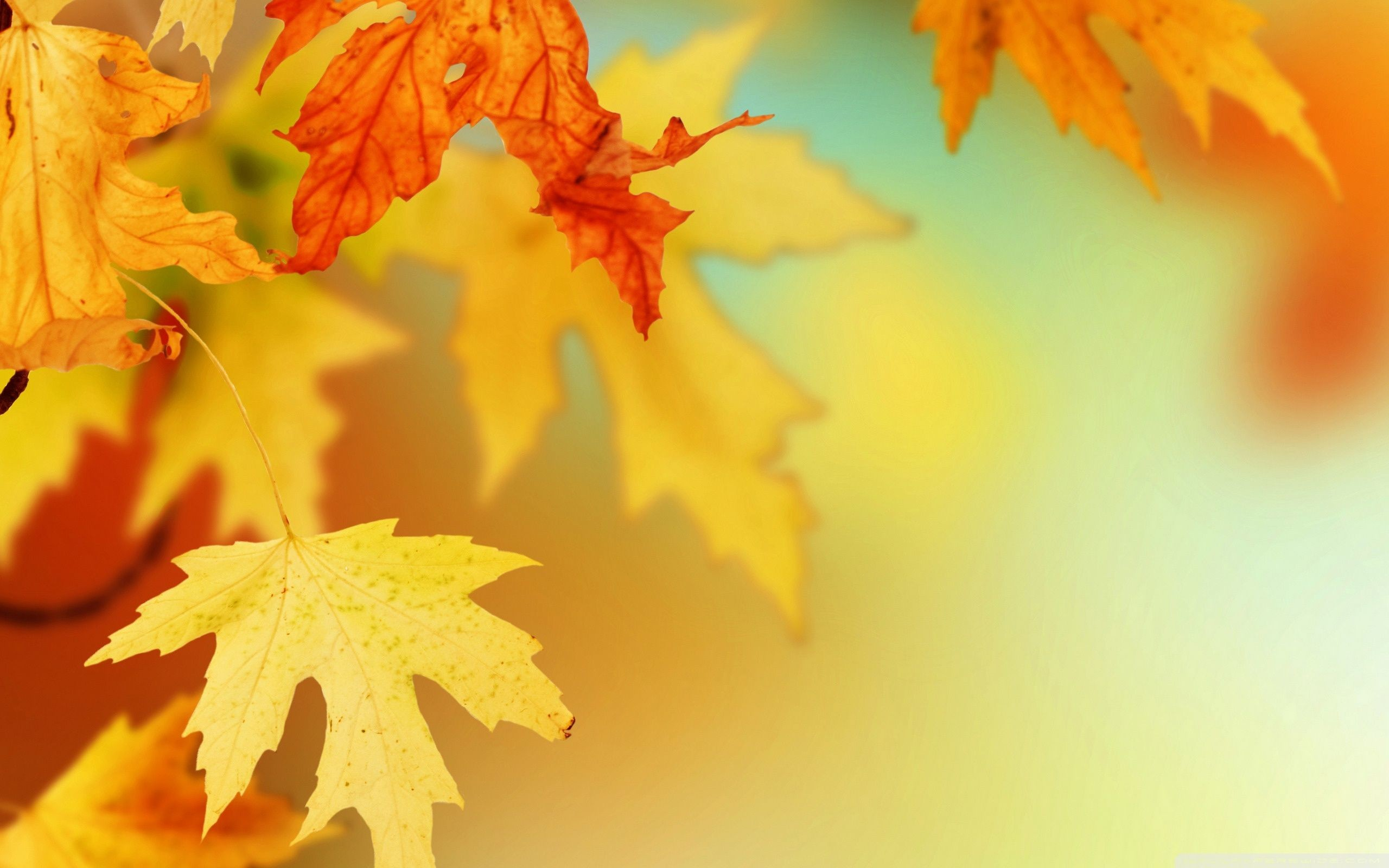 Pin by Ishita Sidhu on Quotes Nature wallpaper Autumn leaves