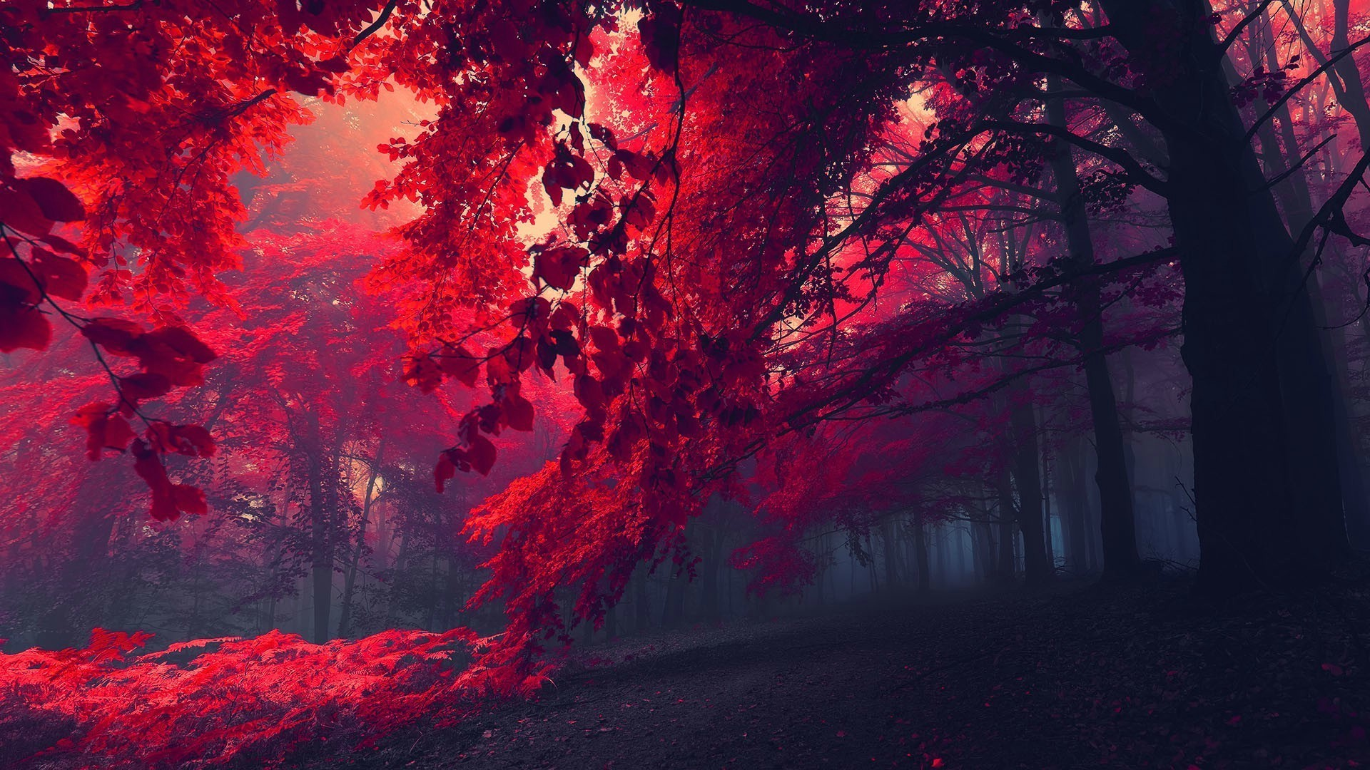 Red Nature Wallpaper 65 Images
