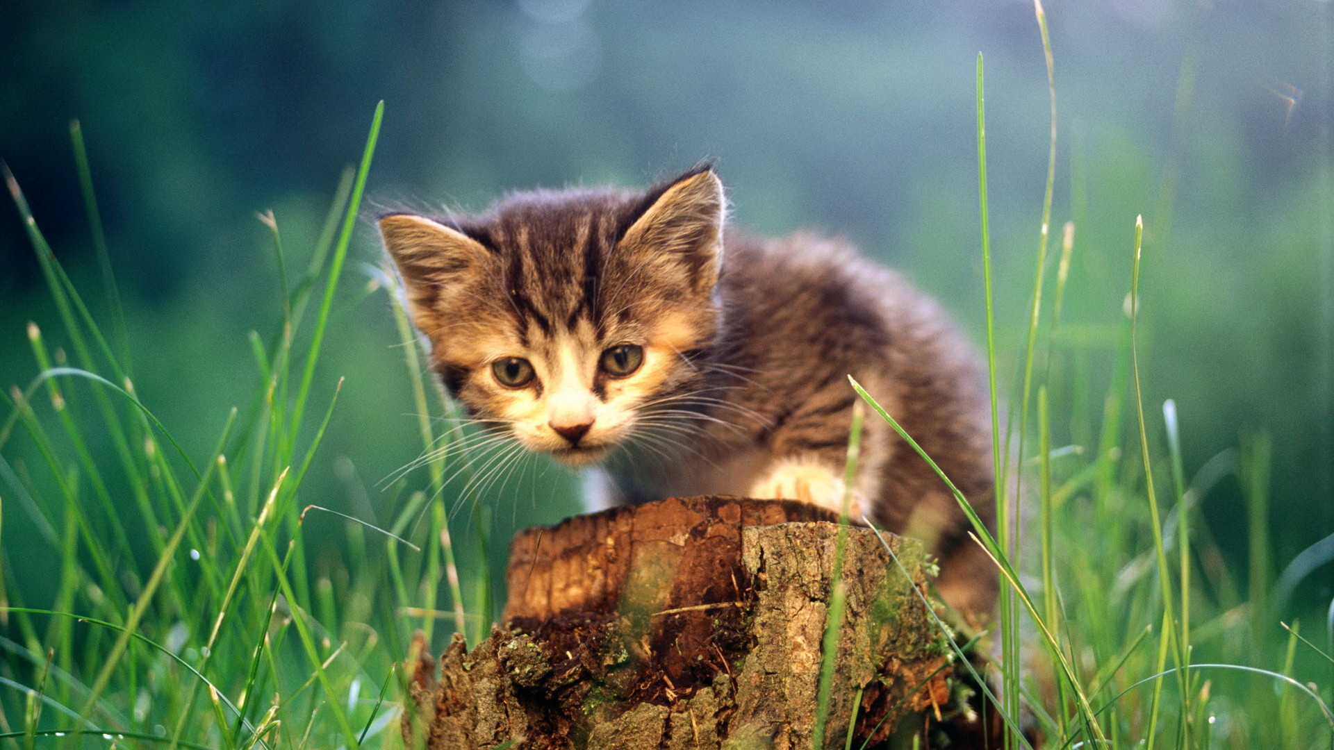 1920x1080 cats animals grass kittens - Wallpaper (#635650) / Wallbase.cc
