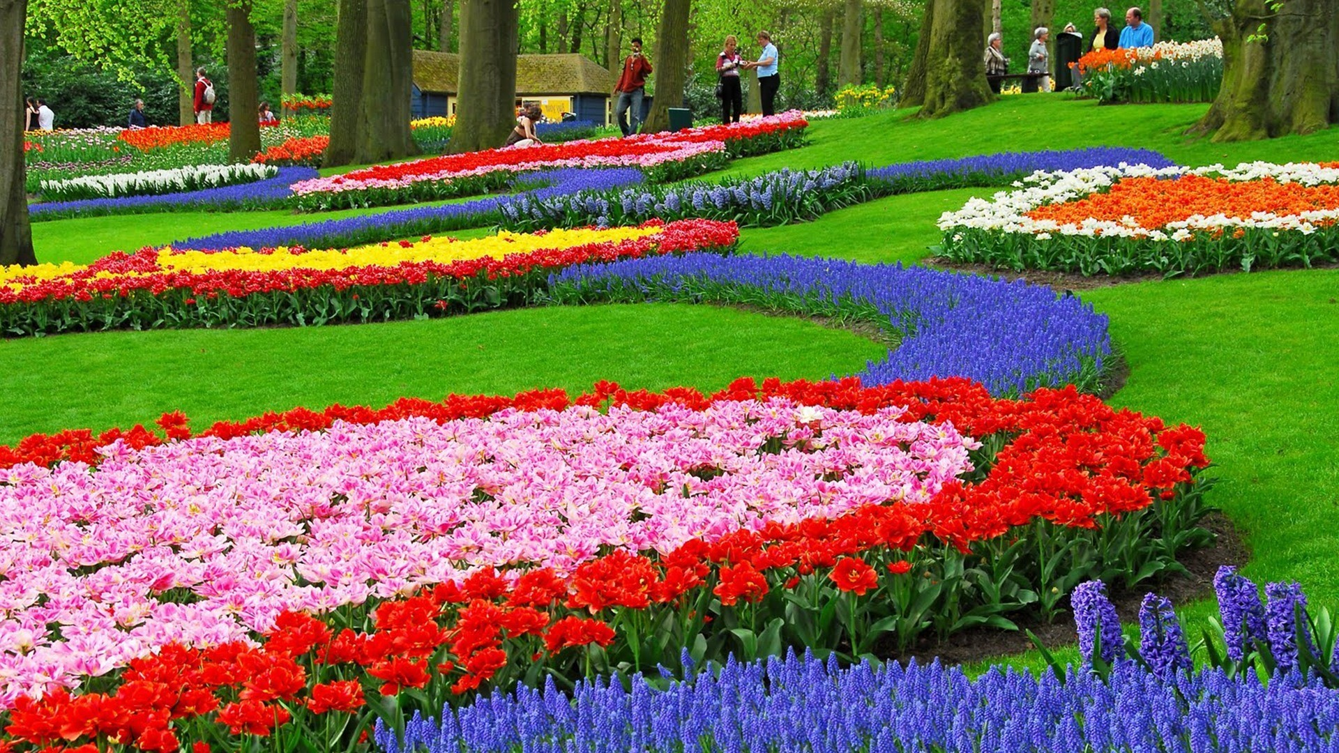 1920x1080 flower garden wallpaper 7 ...