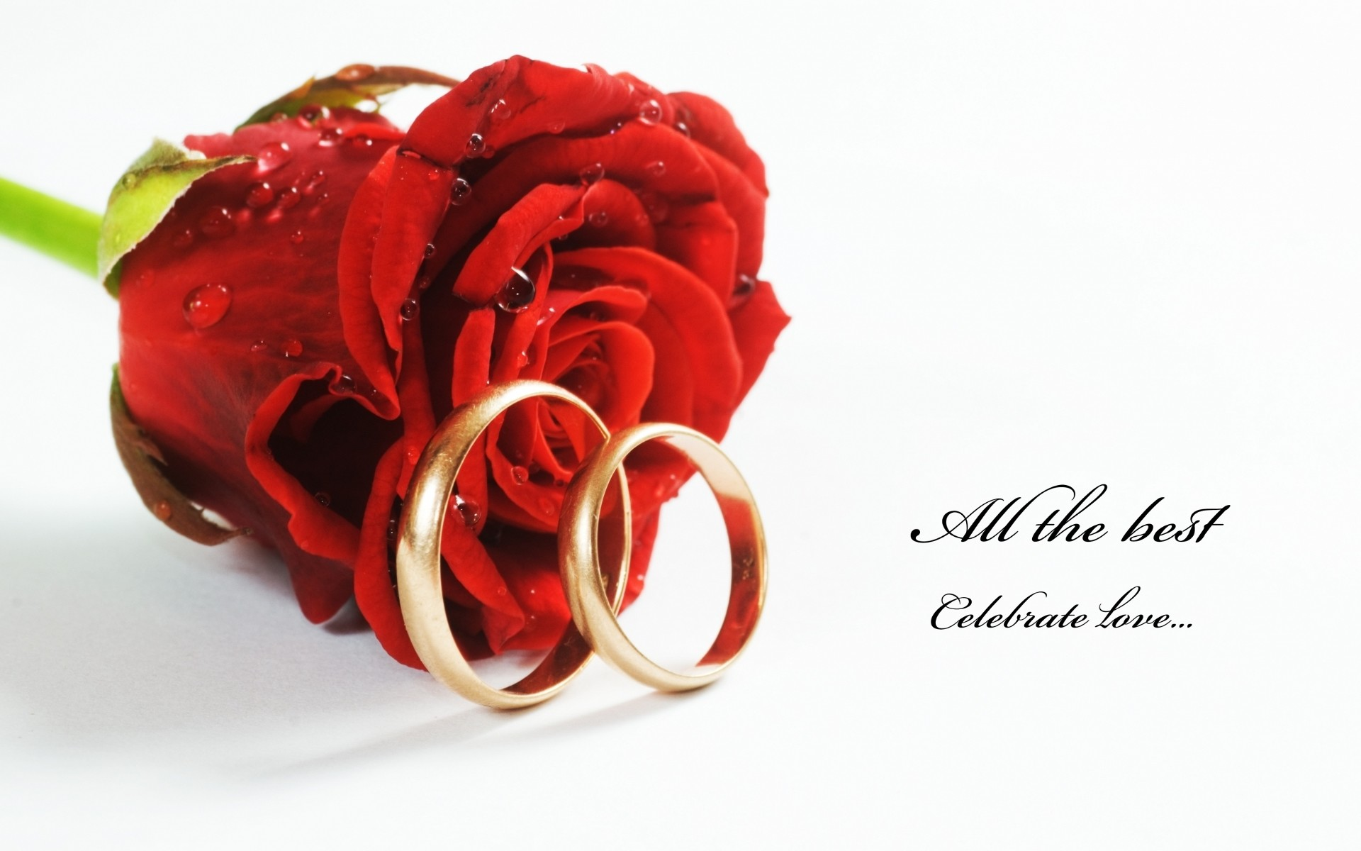 1920x1200 nice-red-roses-with-rings-hd-free-wallpapers