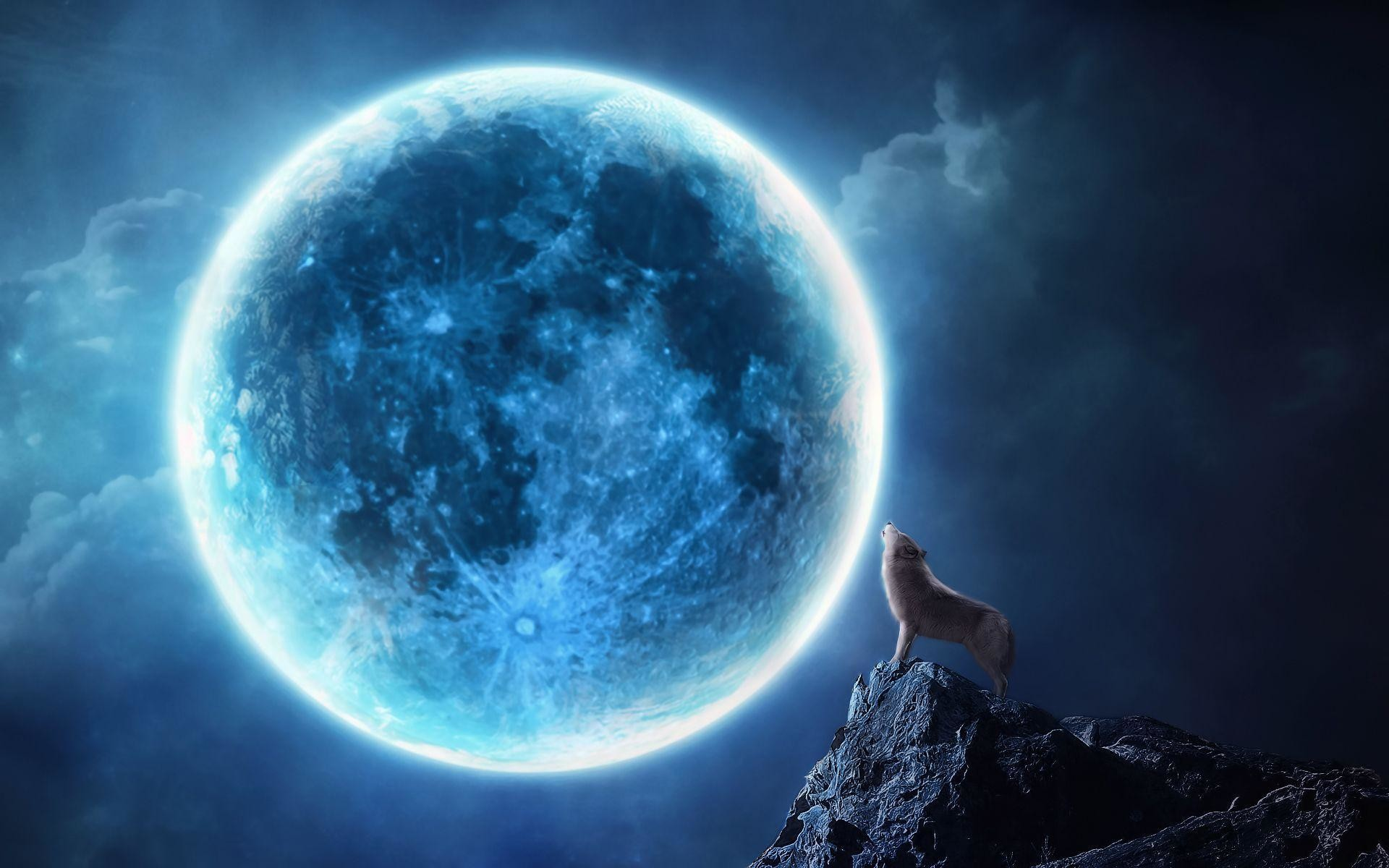 1920x1200 Howling wolf full moon Wallpapers | Pictures