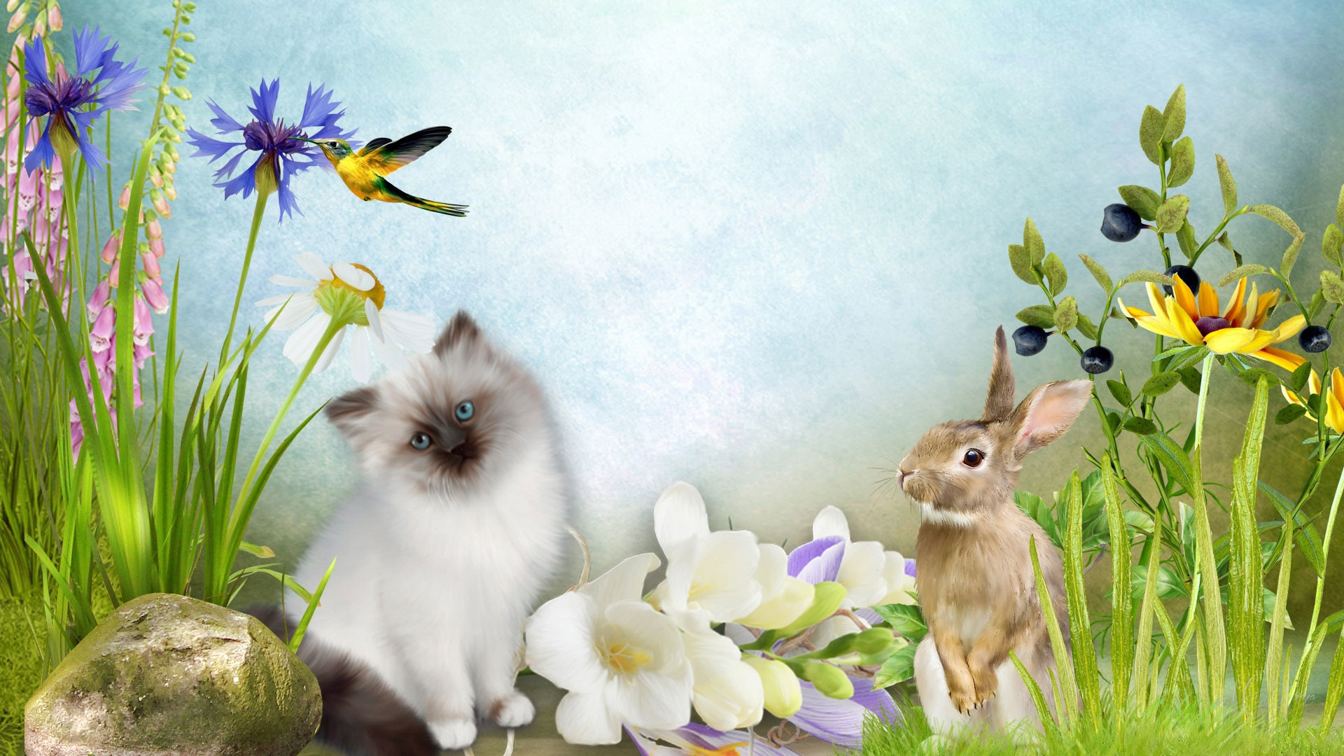 1920x1080 hd pics photos animated cat rabbit nature flowers birds hd quality desktop  background wallpaper