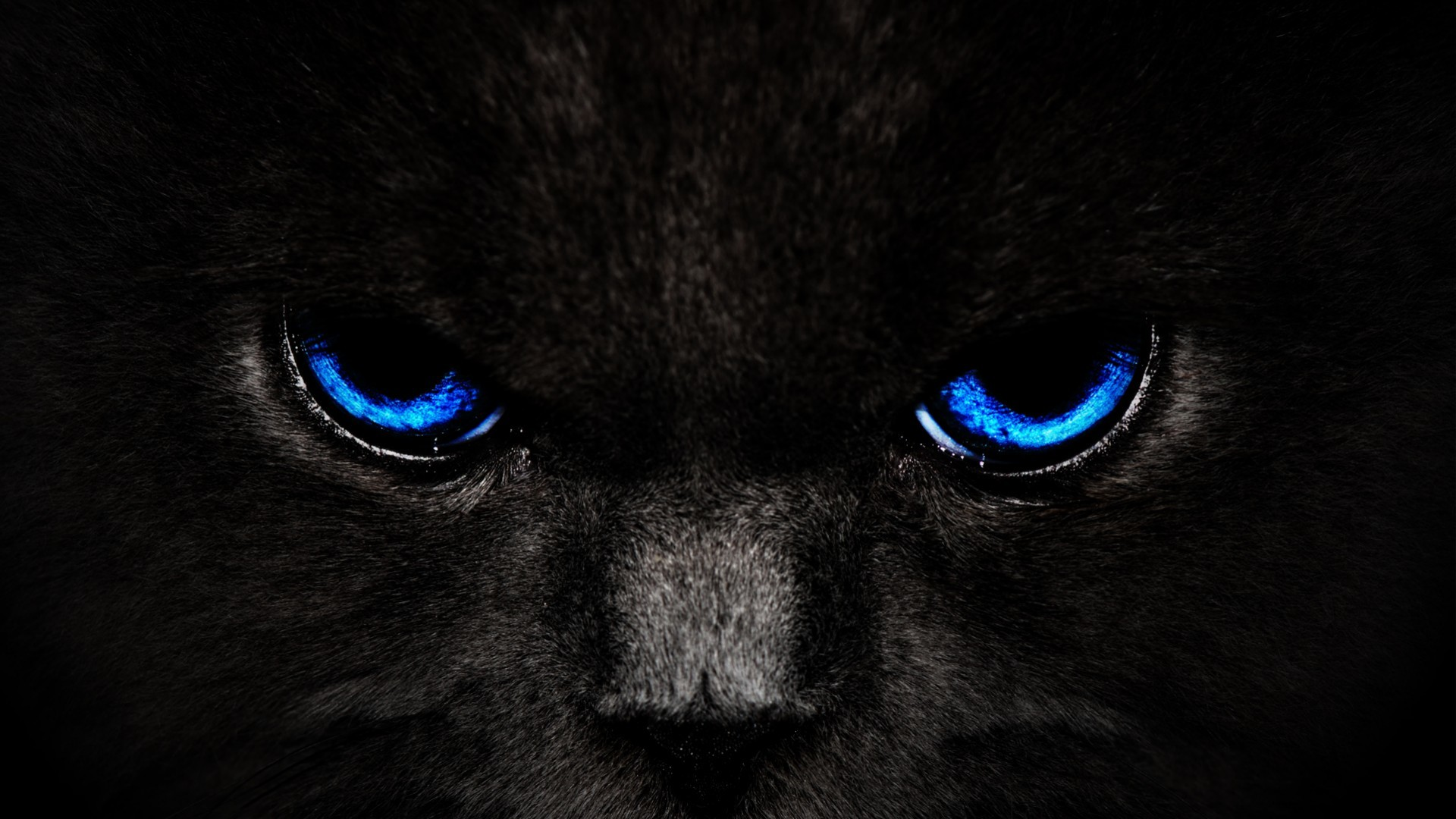 1920x1080 Black Cat Blue Eyes | High Quality Wallpapers,Wallpaper Desktop,High .