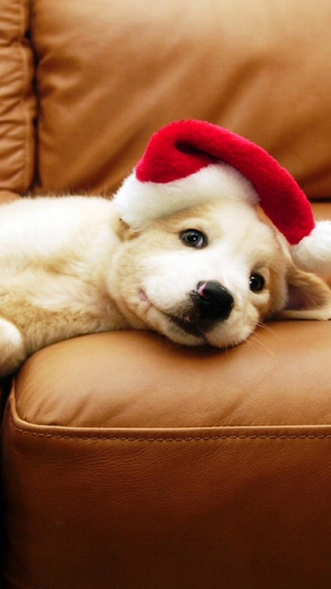 1080x1920 Christmas Puppy Android Wallpaper ...