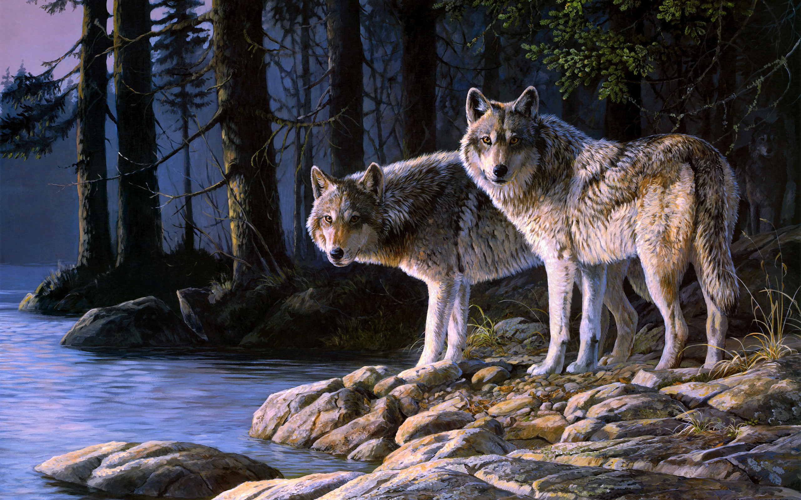 2560x1600 Wolf Wallpaper Nature Backgrounds.