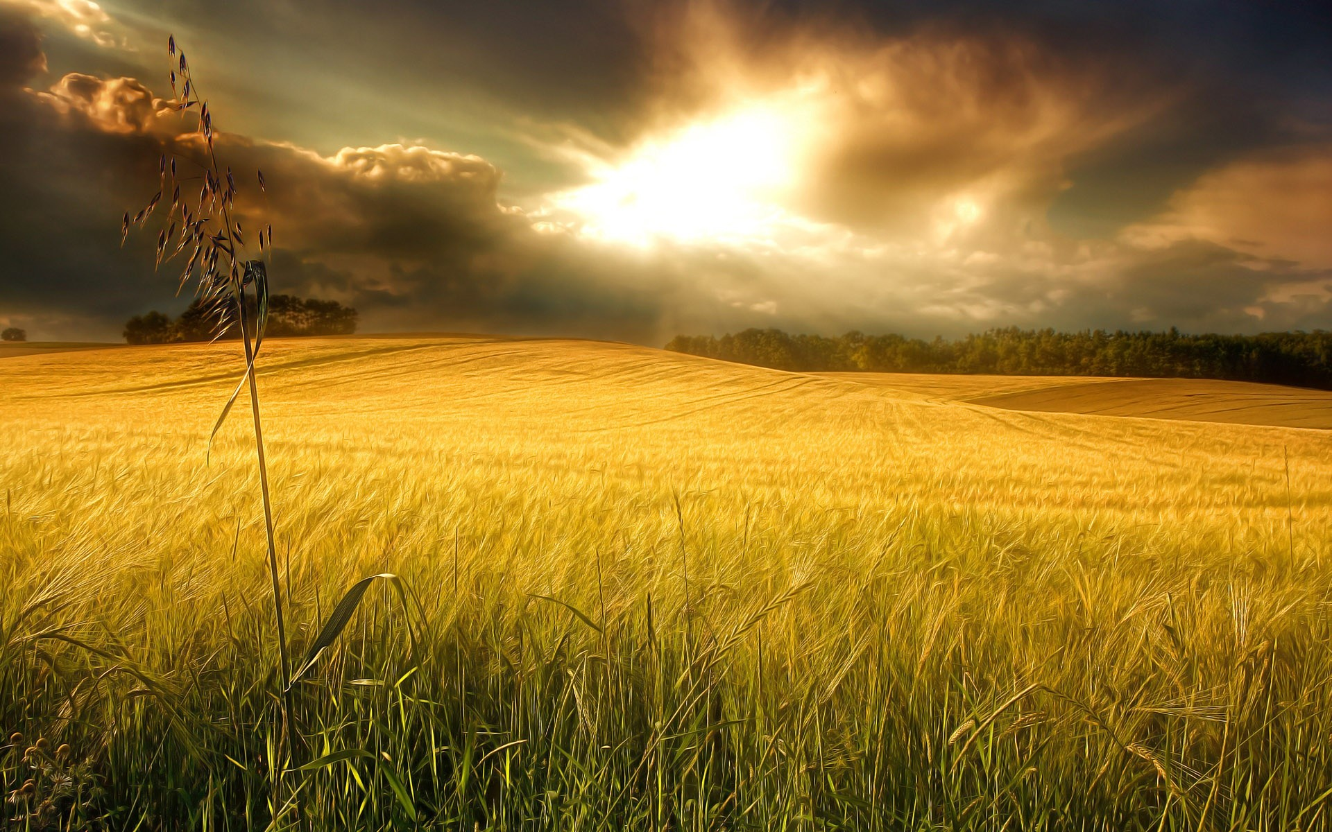 1920x1200 Yellow field - beautiful wheat in the sunlight. Beautiful Nature Landscapes Desktop  Wallpapers. Awsome