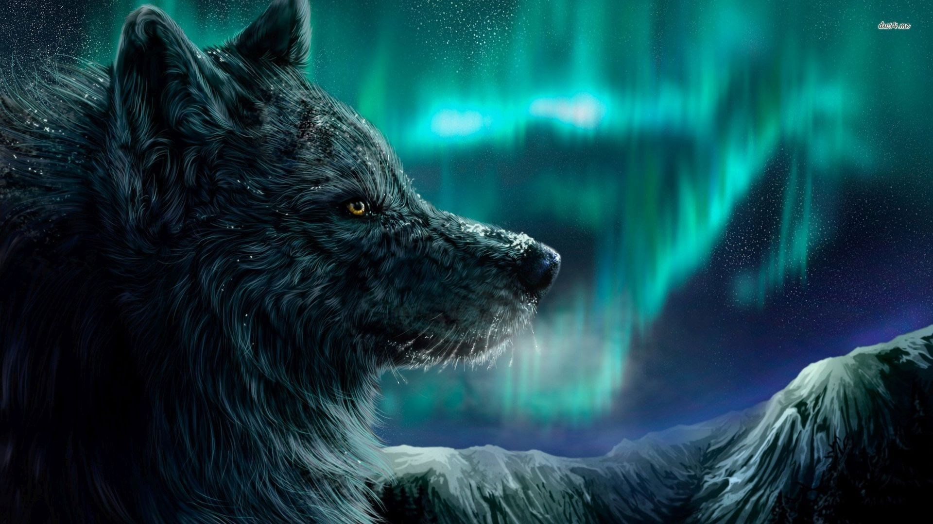 1920x1080 ... WallpaperSafari Wolf Wallpaper #6832268 ...