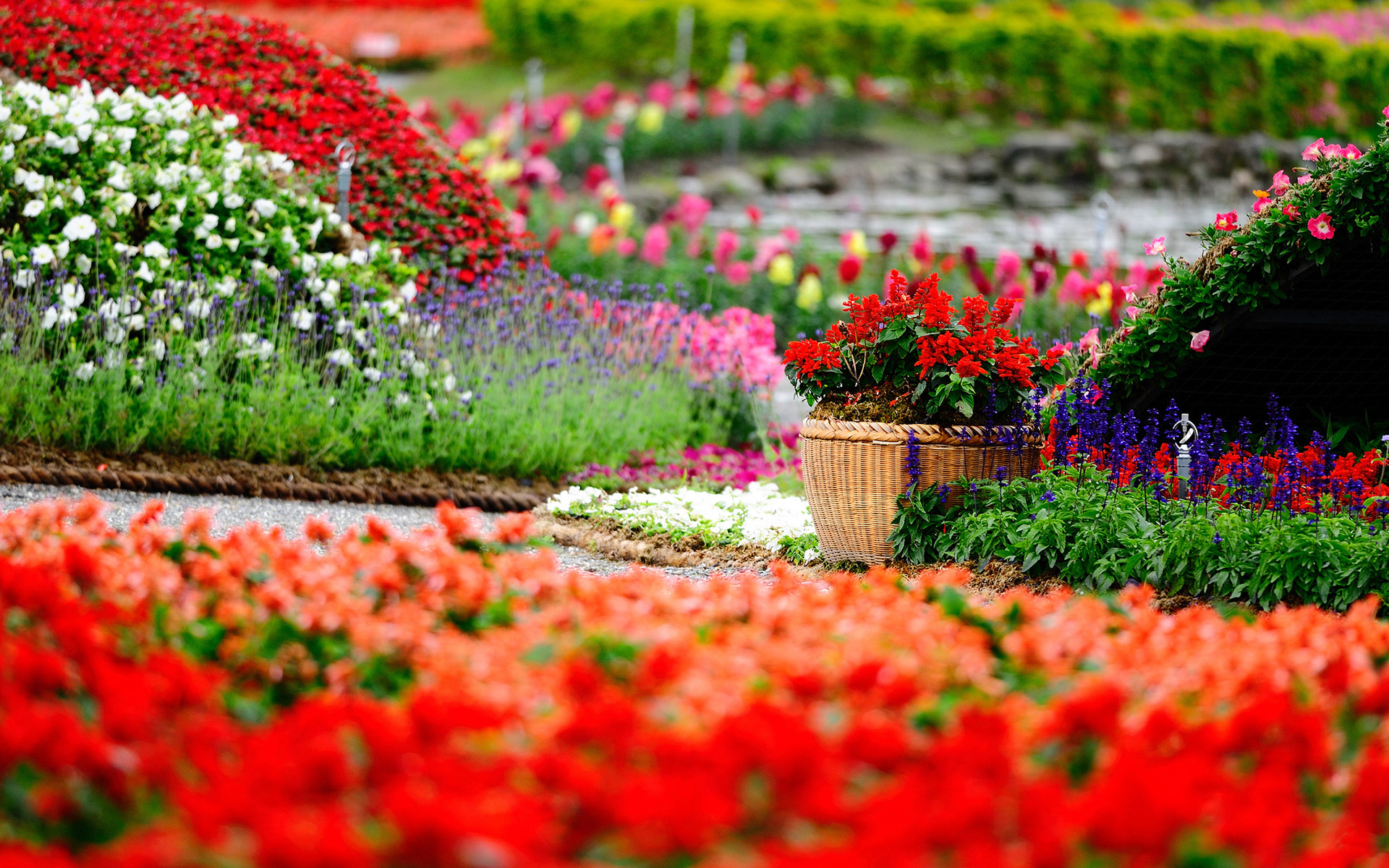 1920x1200 wallpaper flowers · garden · summer