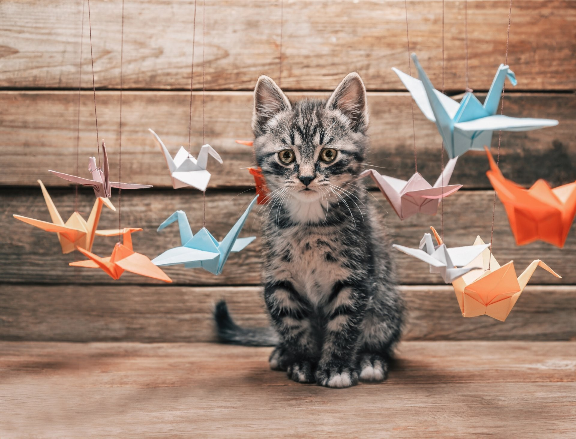 1920x1463 cat kotyara mustache feet tail surprised of interest selection colored  summer colorful paper origami crane zhuravliki