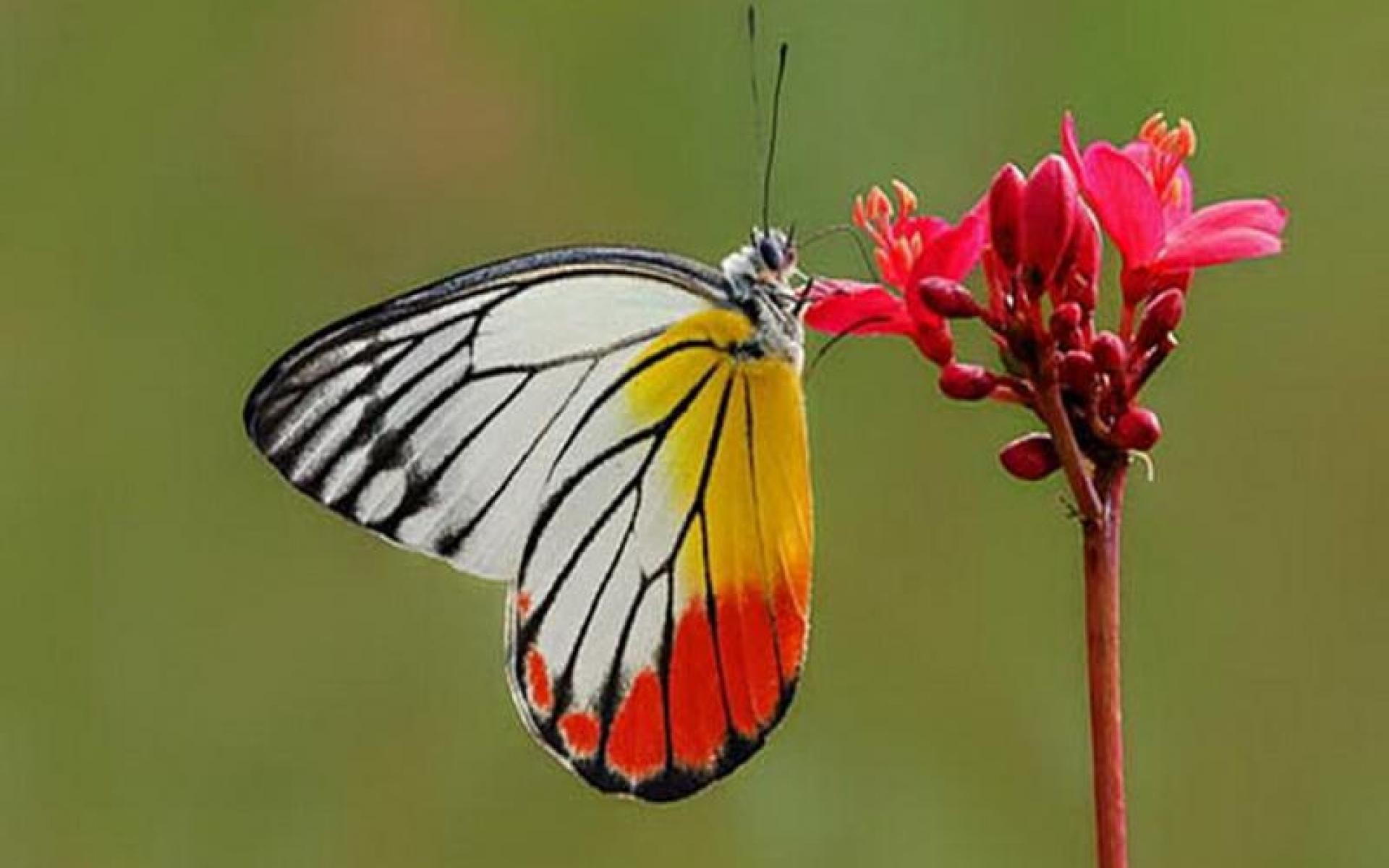 Butterfly - photo#37