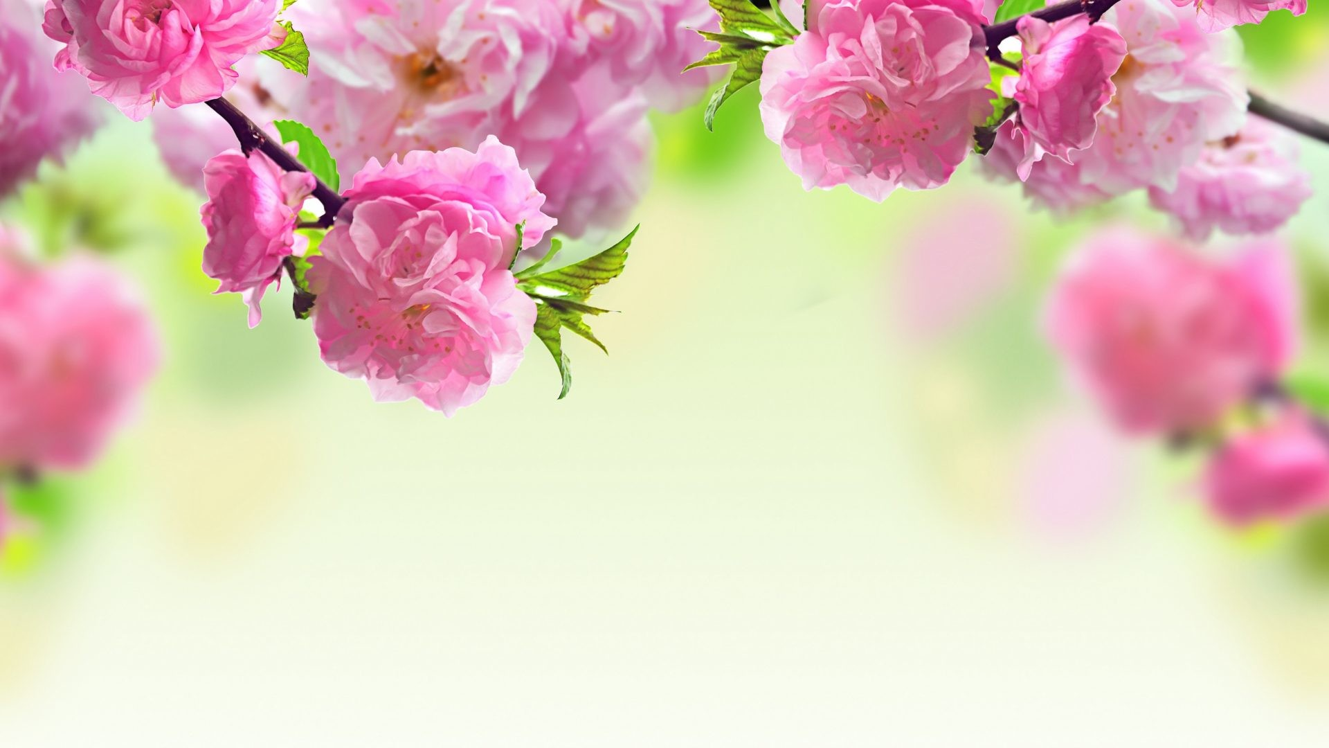 Hd Wallpaper Pink Flowers 72 Images