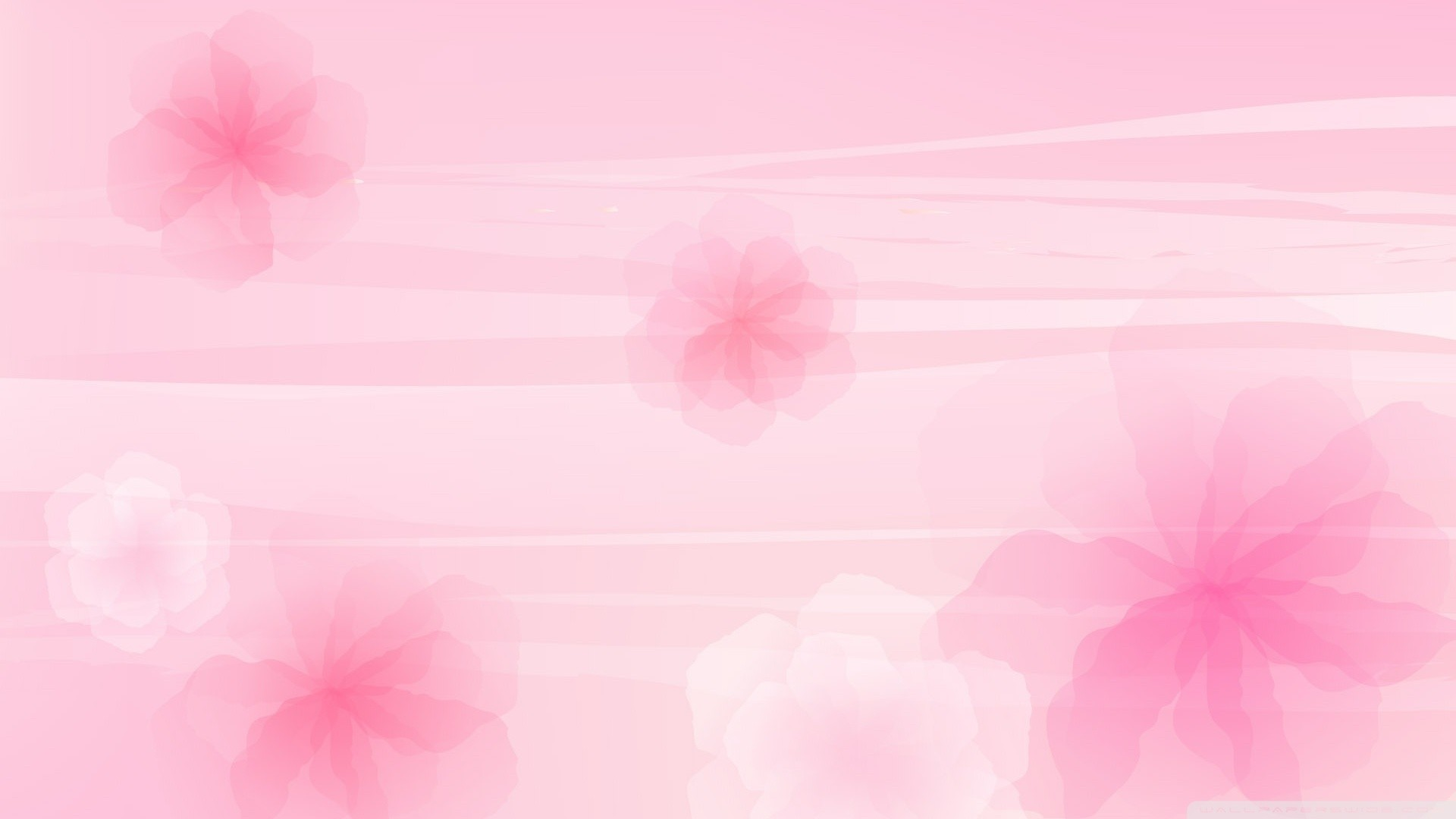 Pink Flower Background 47 Images