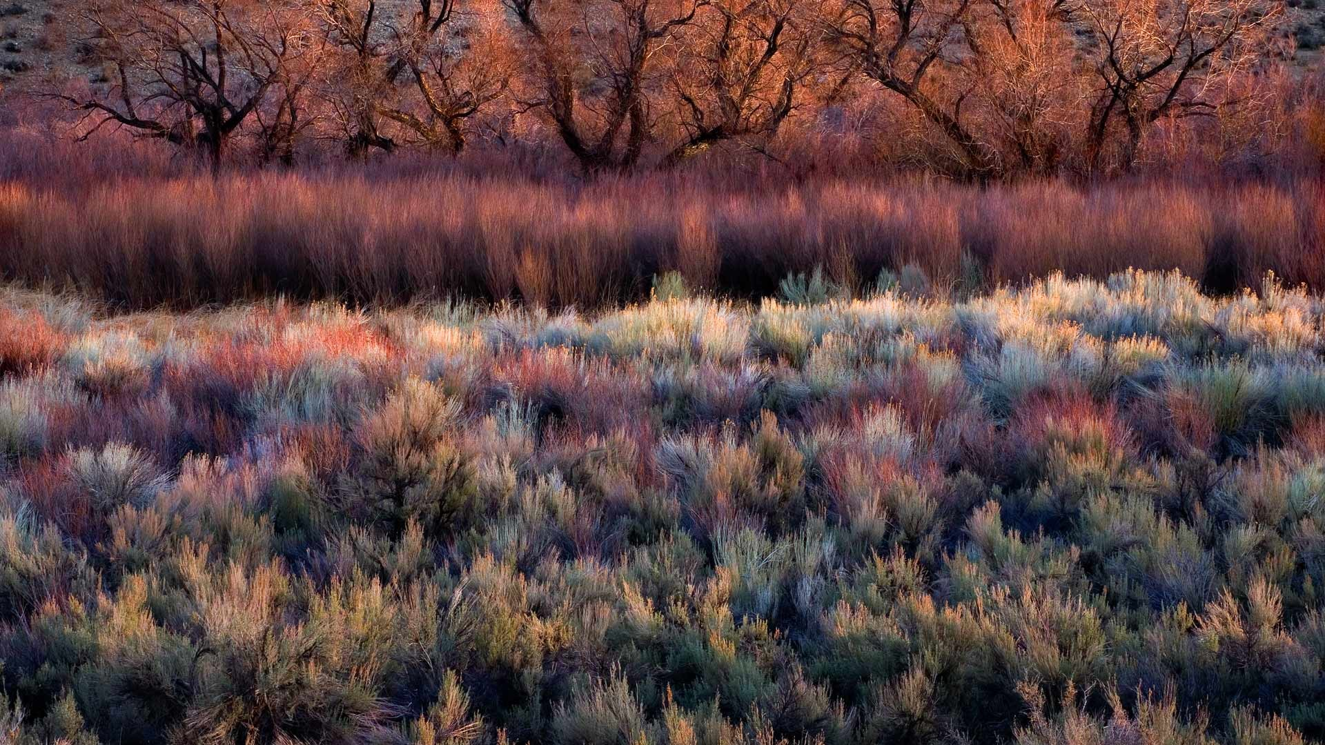 1920x1080 2014-01-10_EN-AU10309991569_Foliage-including-cottonwoods-willows-sage-