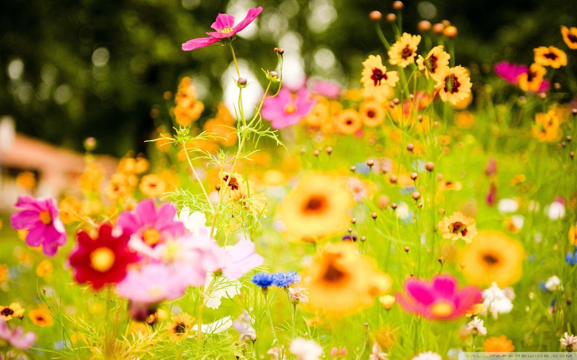 Summer Flower Wallpaper 66 Images