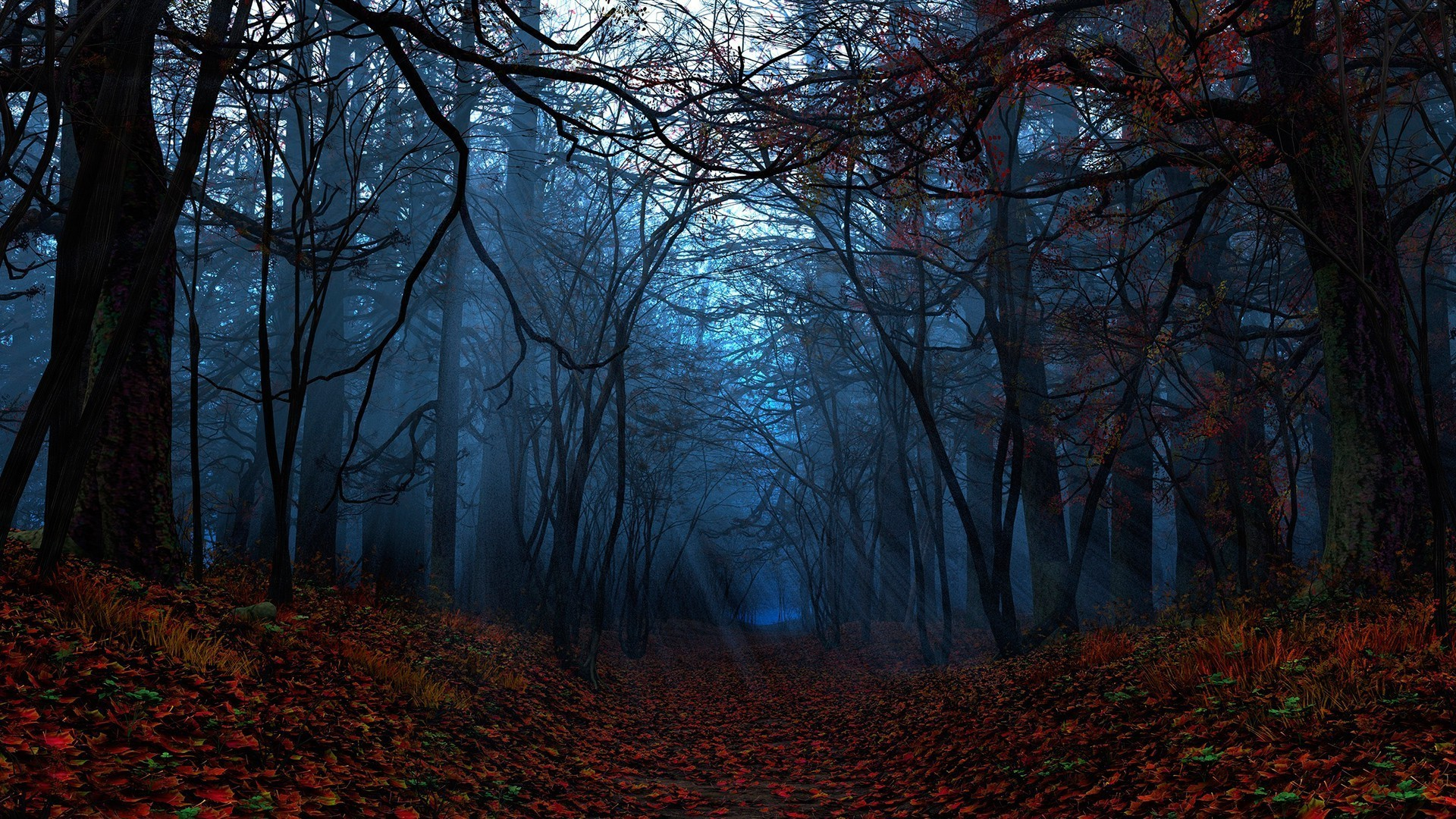 Forest Wallpaper HD (77+ images)