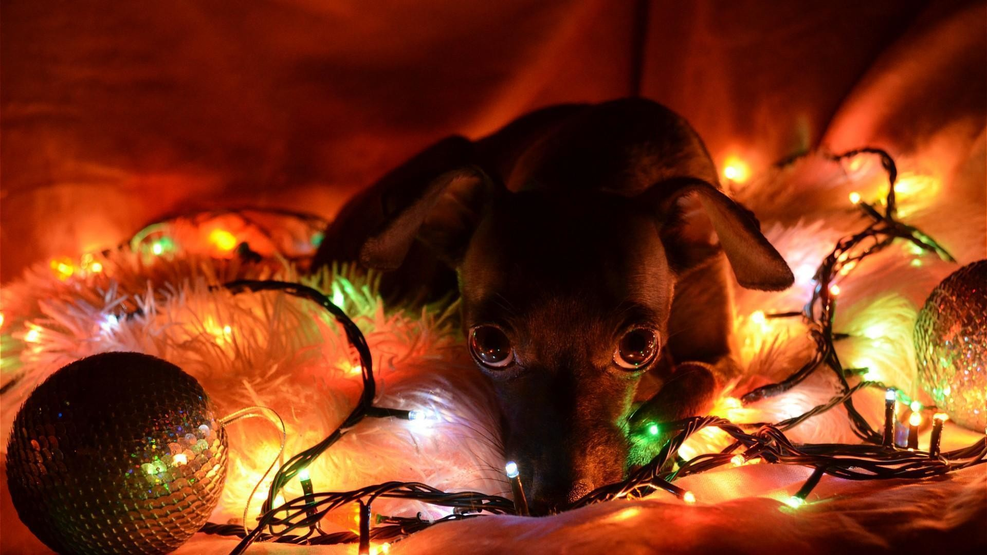 1920x1080 Christmas Puppies Wallpapers - Wallpaper Cave