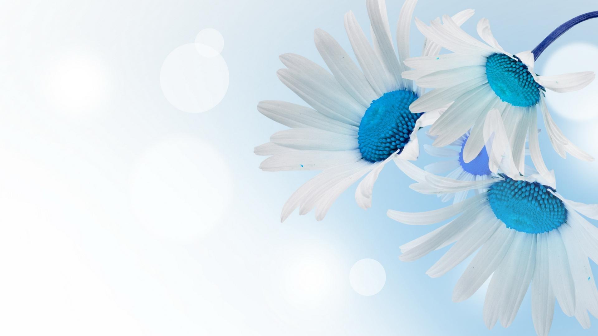 Blue wallpaper with white flowers 45 images 1920x1080 knstlerisch blume white flower gnseblmchen knstlerisch blau wallpaper mightylinksfo