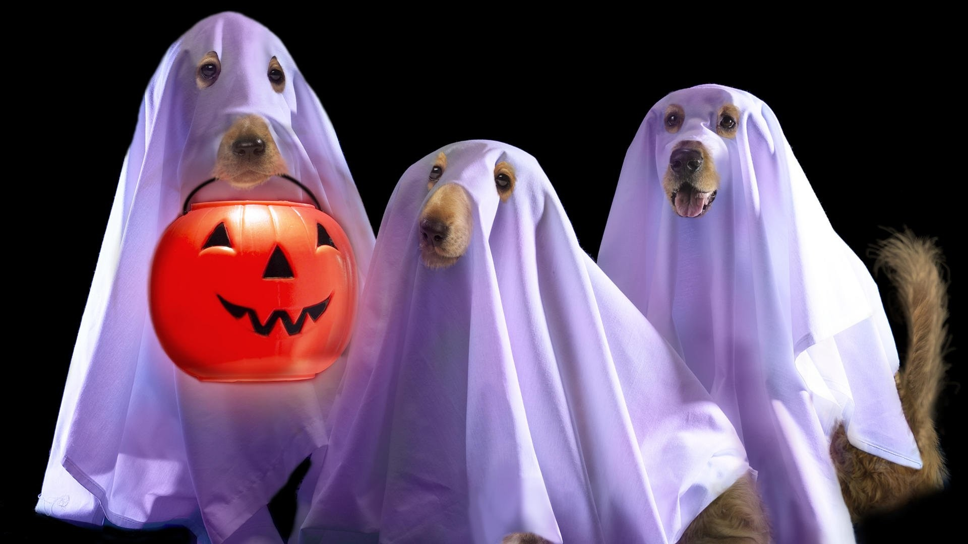 Beautiful Wallpaper High Resolution Halloween - 486781  Snapshot_5206.jpg