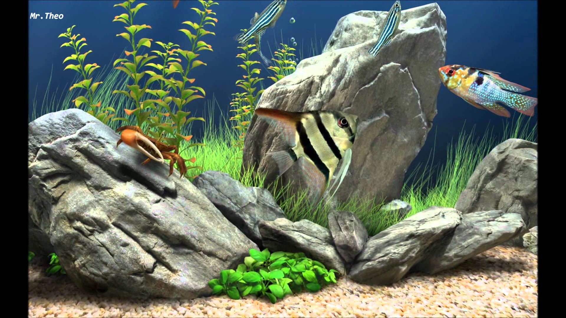3d fish tank wallpaper 59 images for Fish tank 3d live wallpapers