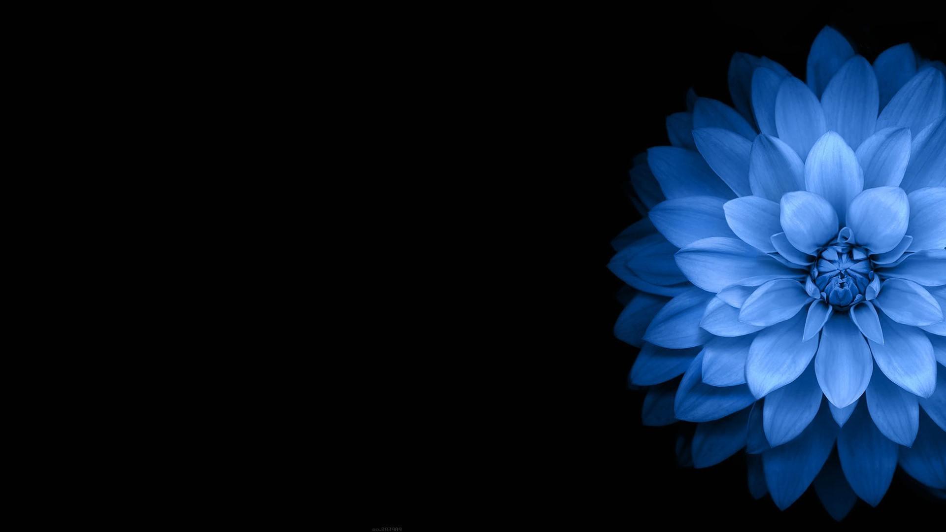Blue Flower Desktop Wallpaper Hd