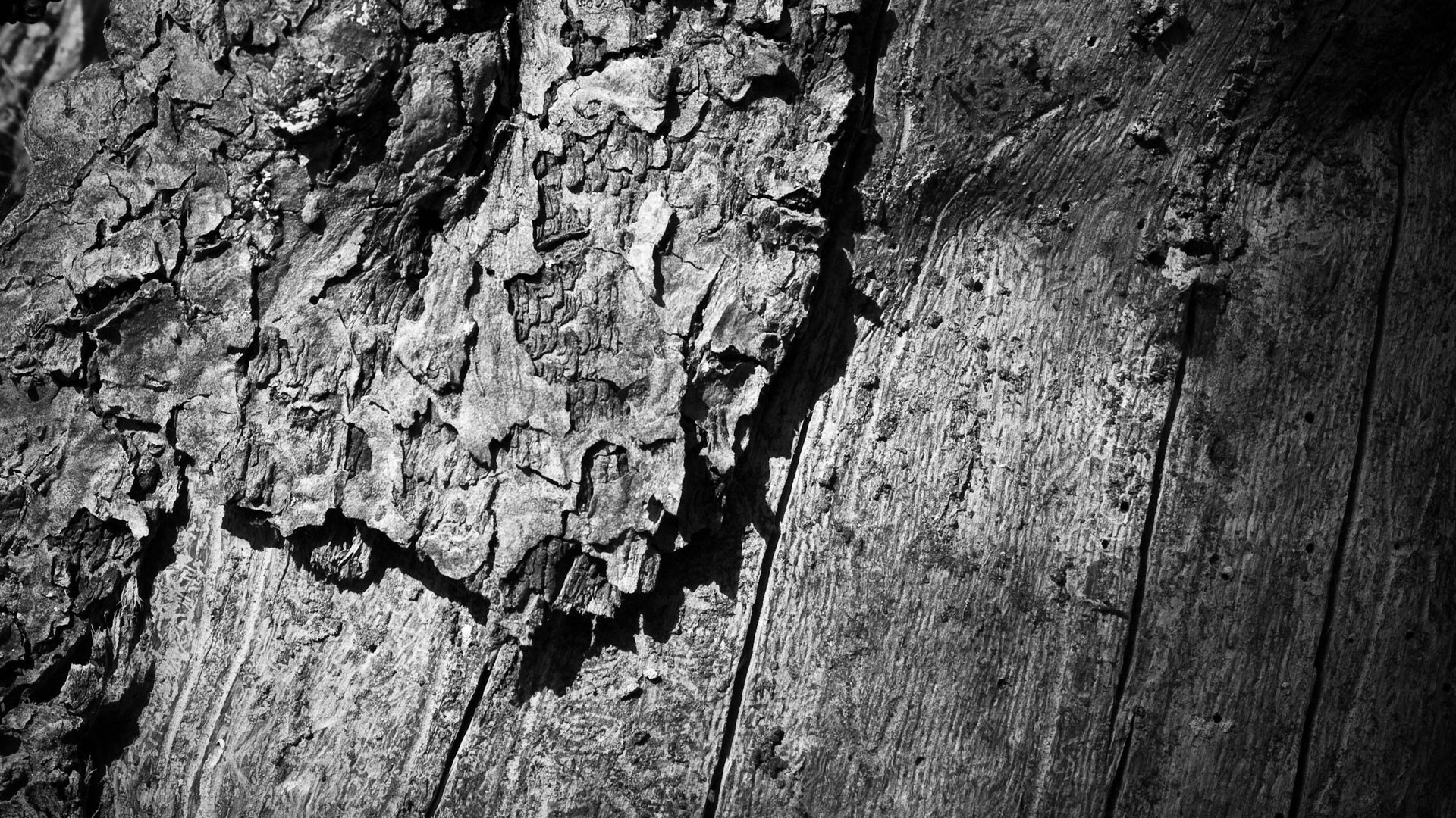 1920x1080  Wallpaper wooden, tree, trunk, surface, black white