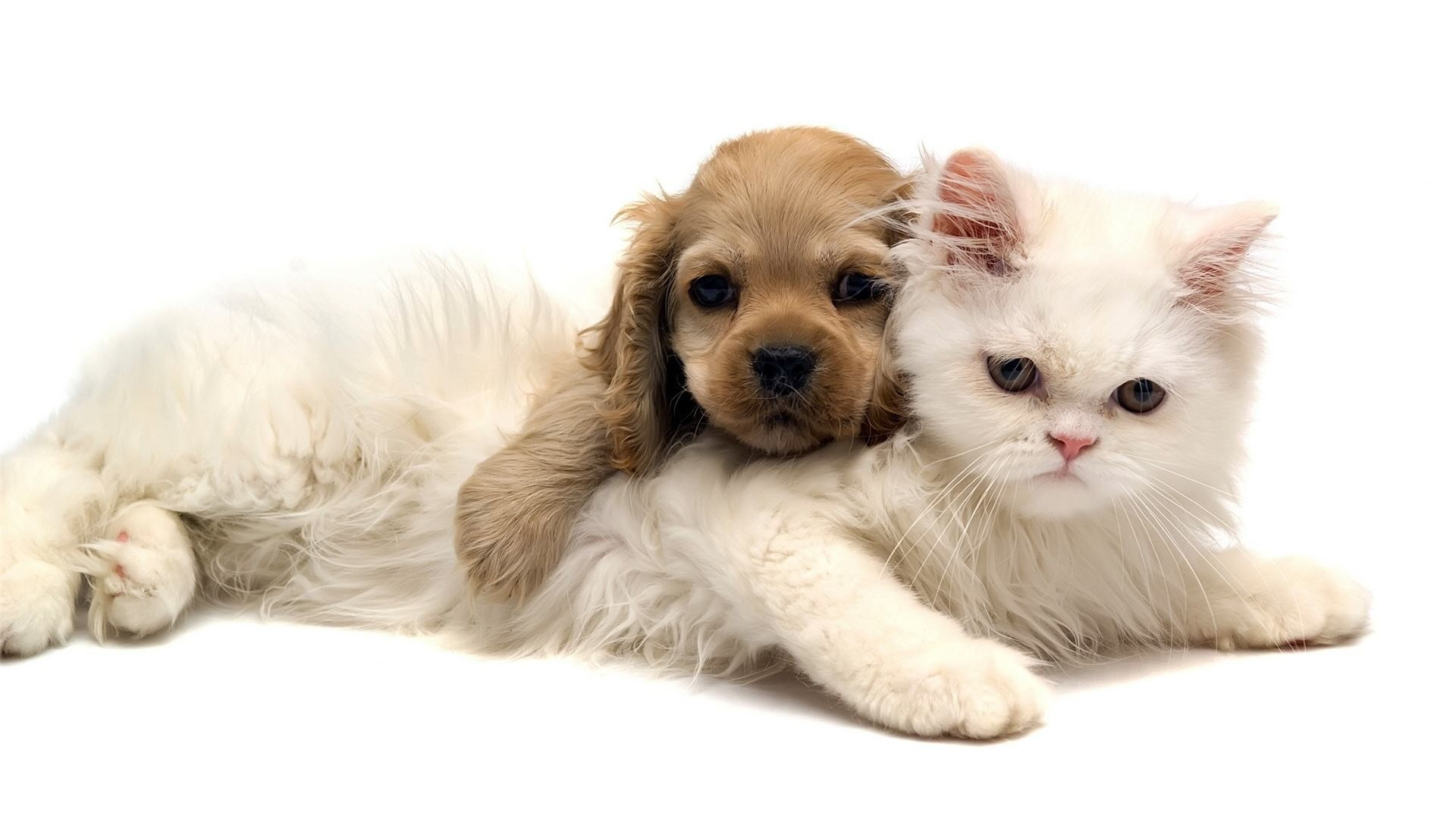 1920x1080 Adorable Cat and Dog Wallpaper | Wallpapers Green Cat Cute And Dog Jpg   | #