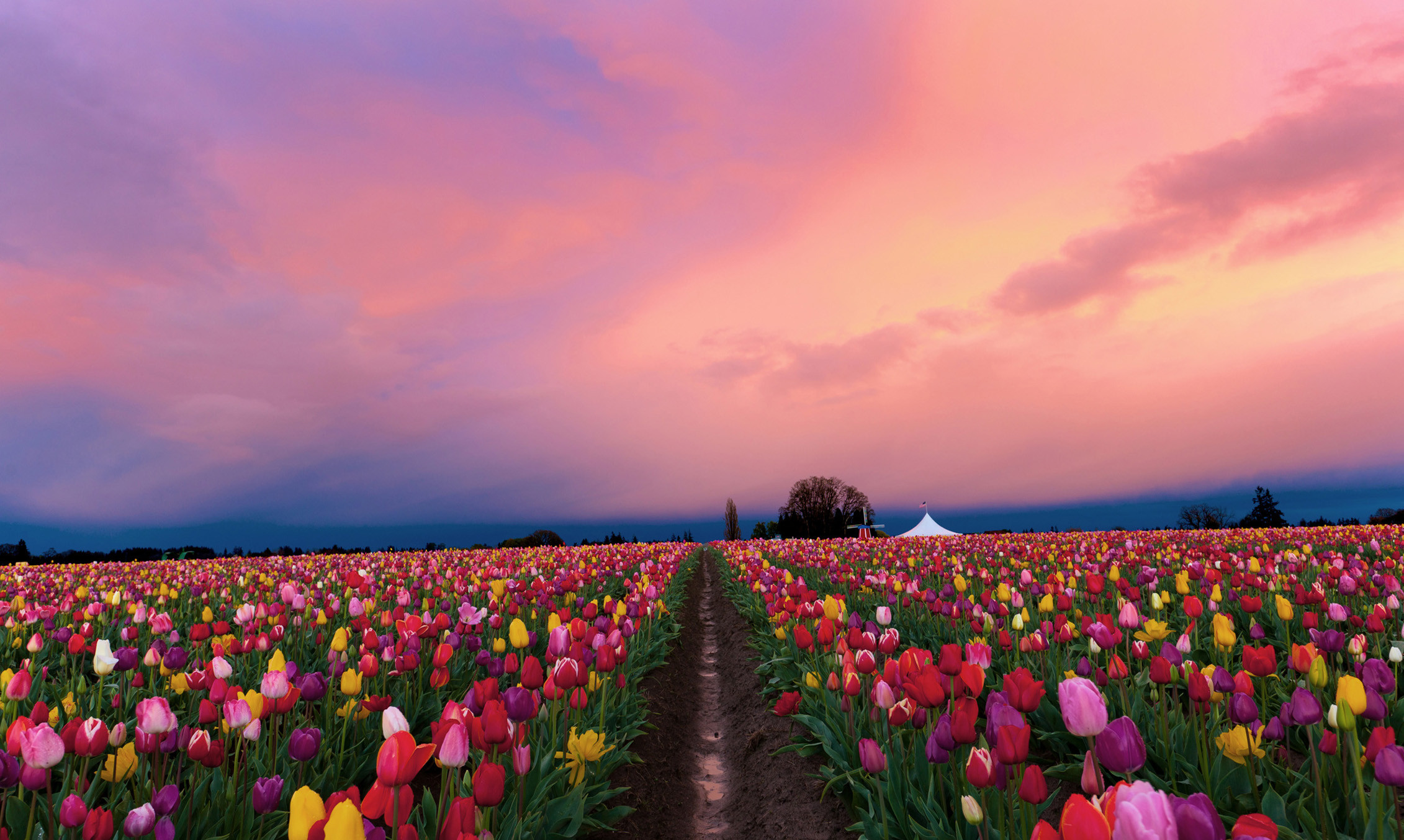 Nature backgrounds for mac 68 images - Natures wallpapers for desktop ...