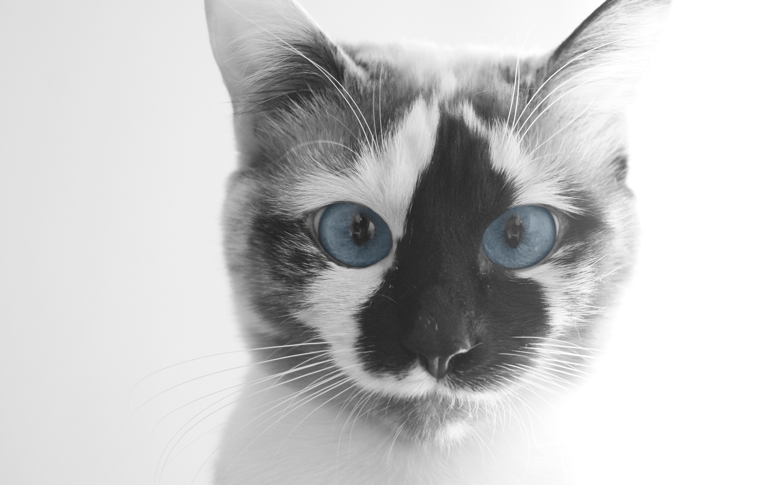2560x1600 funny cat face hd. Â«Â«