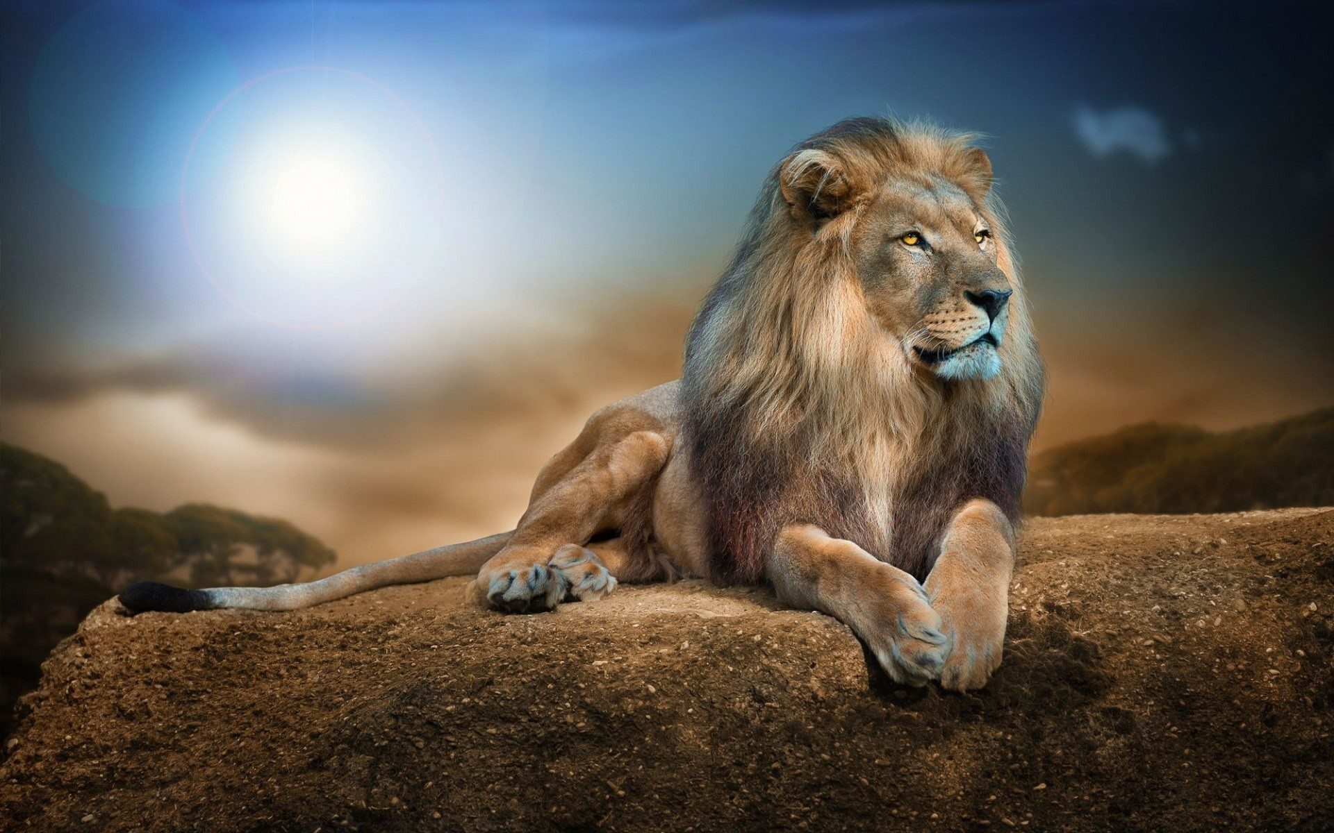 1920x1200  lion full hd wallpapers new