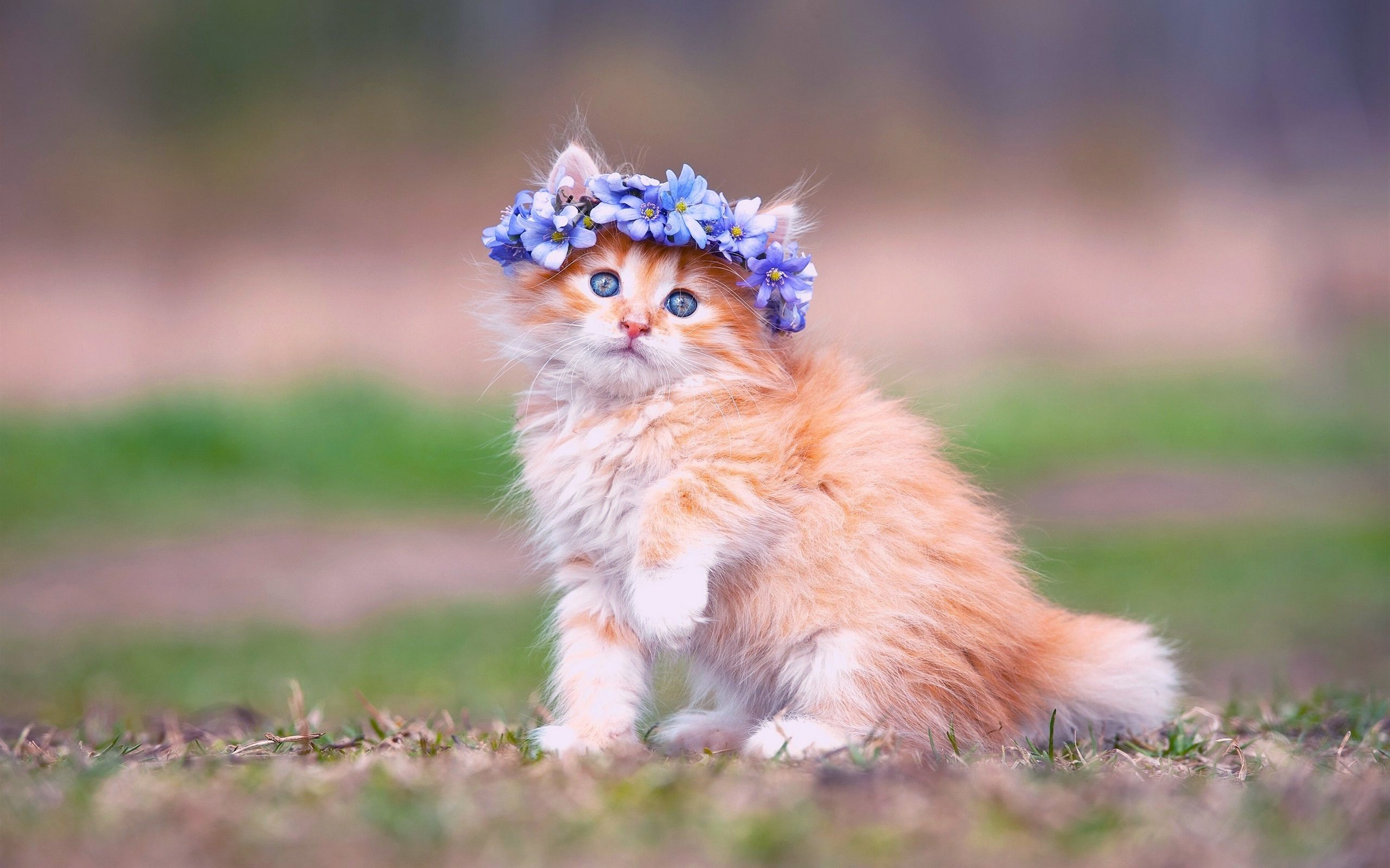 Baby kitten wallpapers 59 images - Kitten backgrounds ...