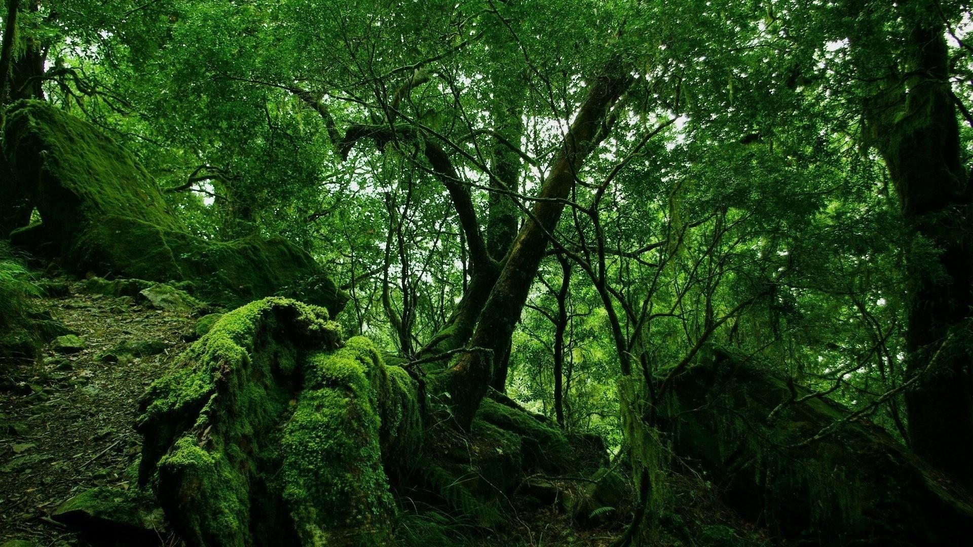 Jungle Wallpaper (72+ Images