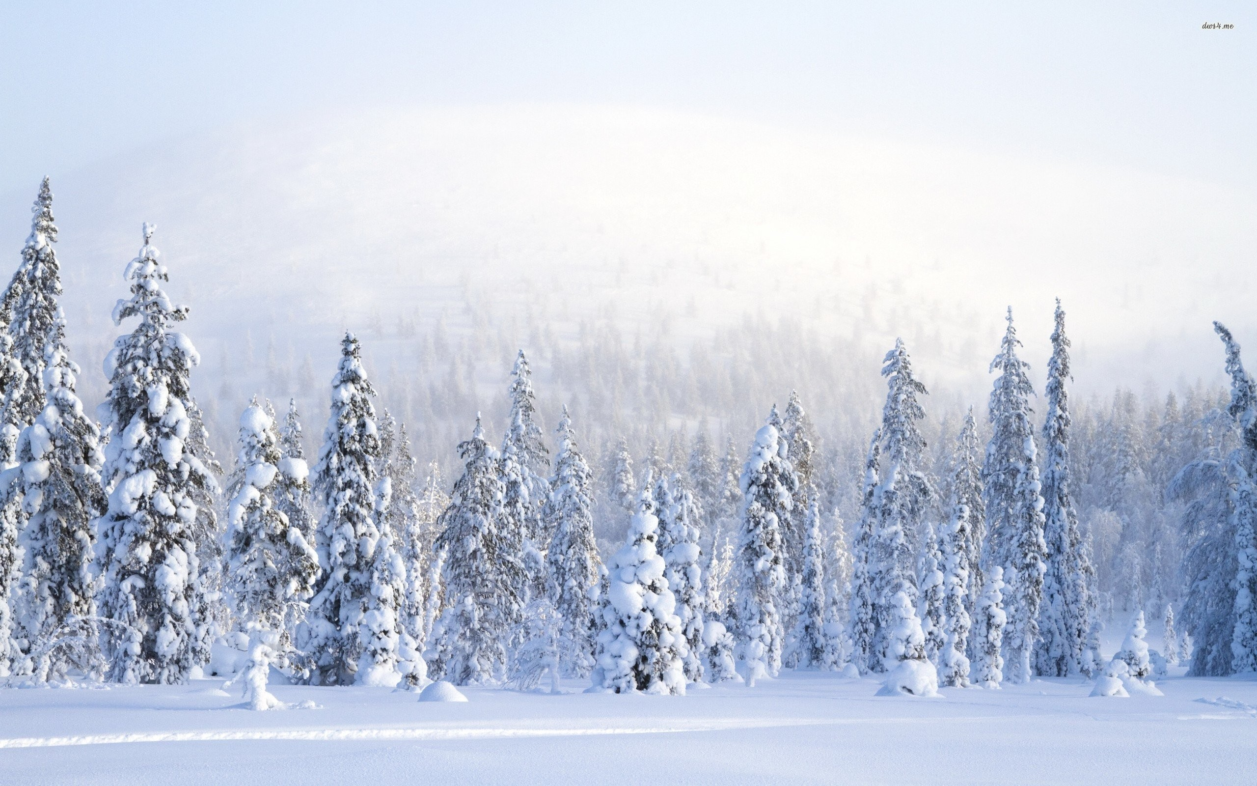 2560x1600 Beautiful Winter Forest amp Pond wallpapers and stock photos