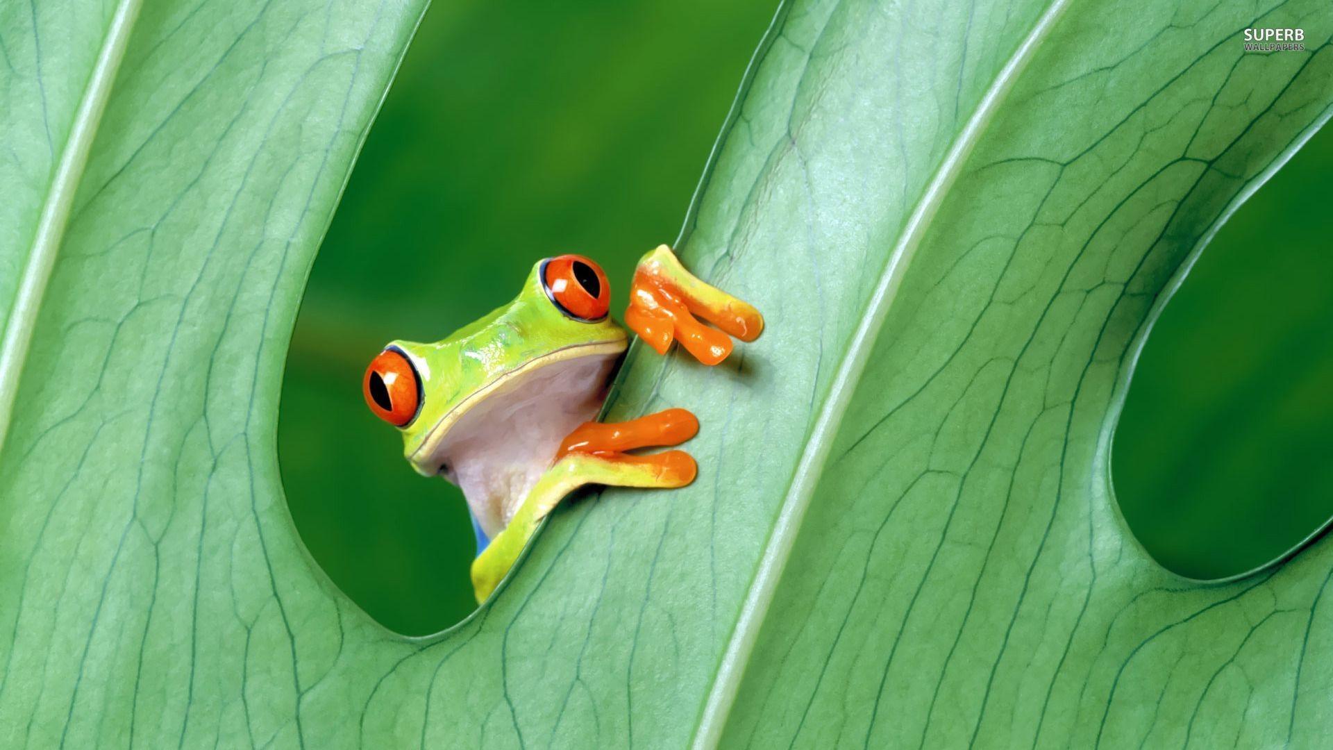 Kermit the frog wallpaper 53 images - Frog cartoon wallpaper ...