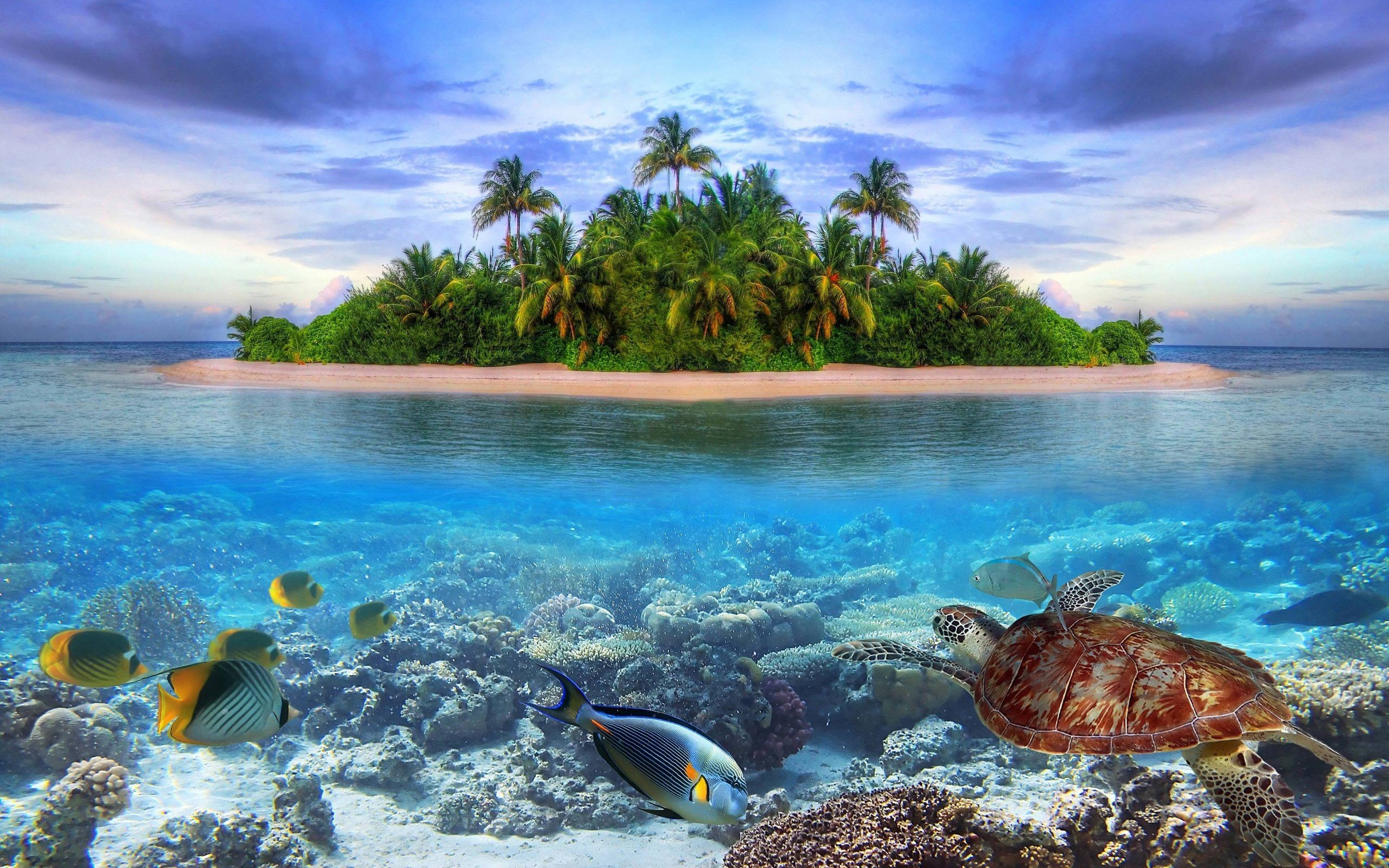 2560x1600 Marine Life Of Tropical Island Wallpaper