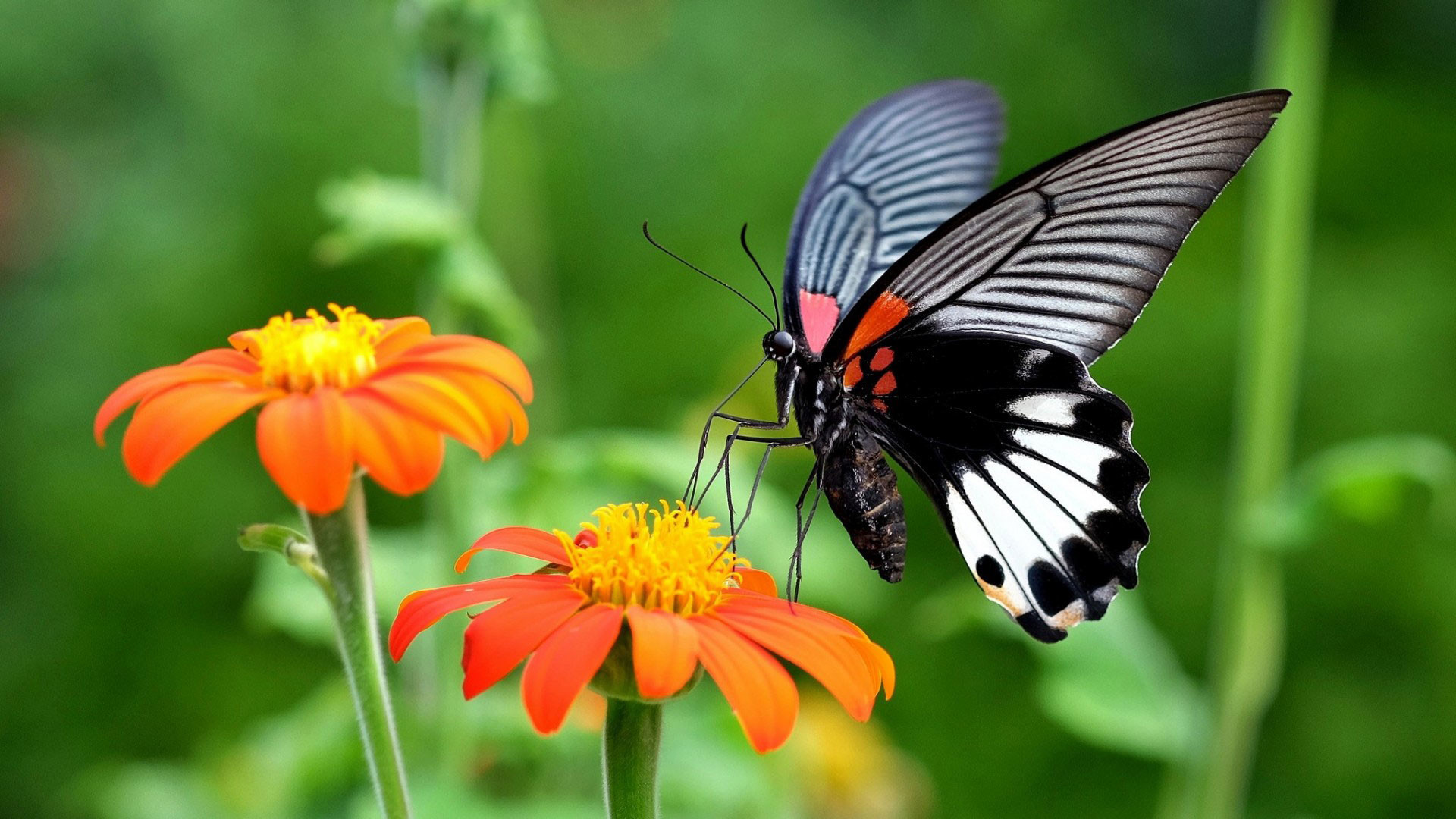 2880x1800 Black Butterfly Desktop Backgrounds Download 2560x1600 HD Wallpaper