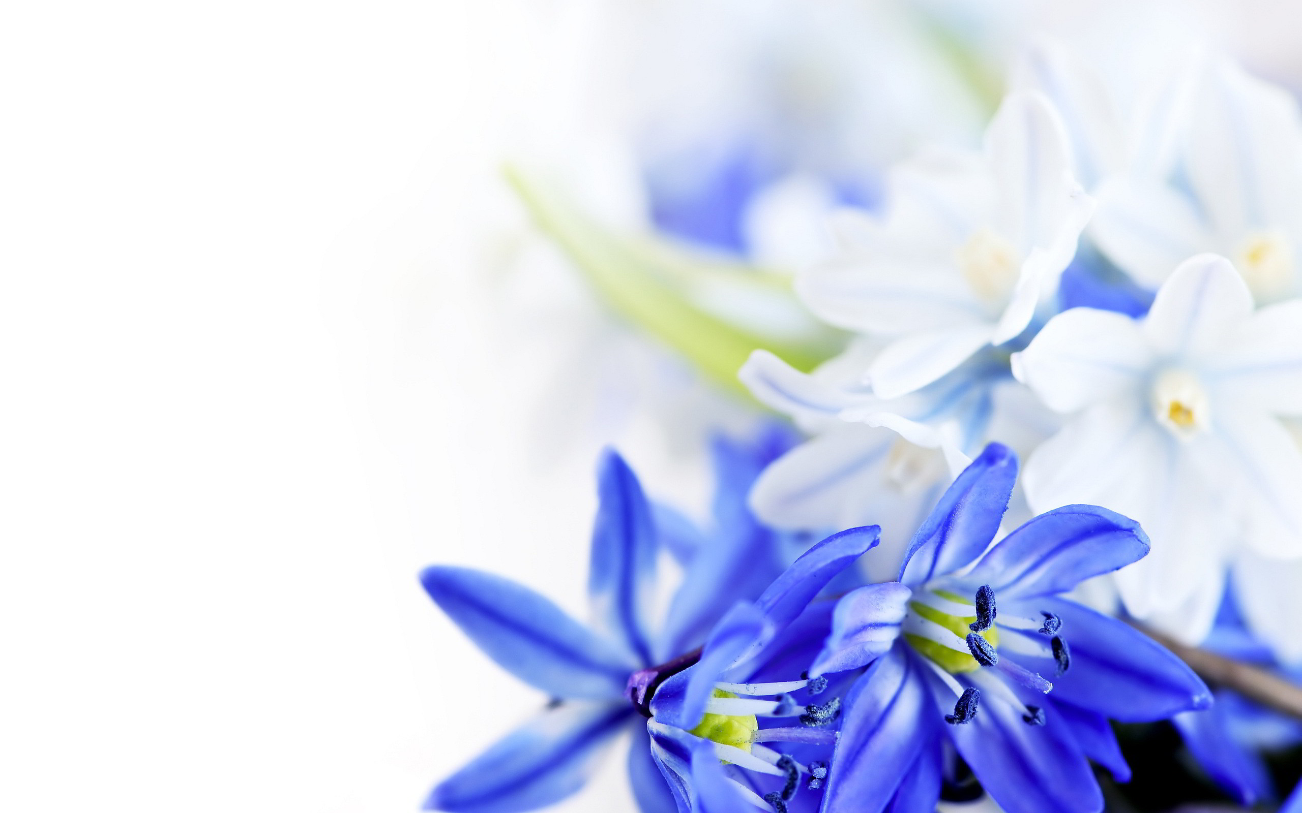 2560x1600 blue flowers background download. Â«Â«